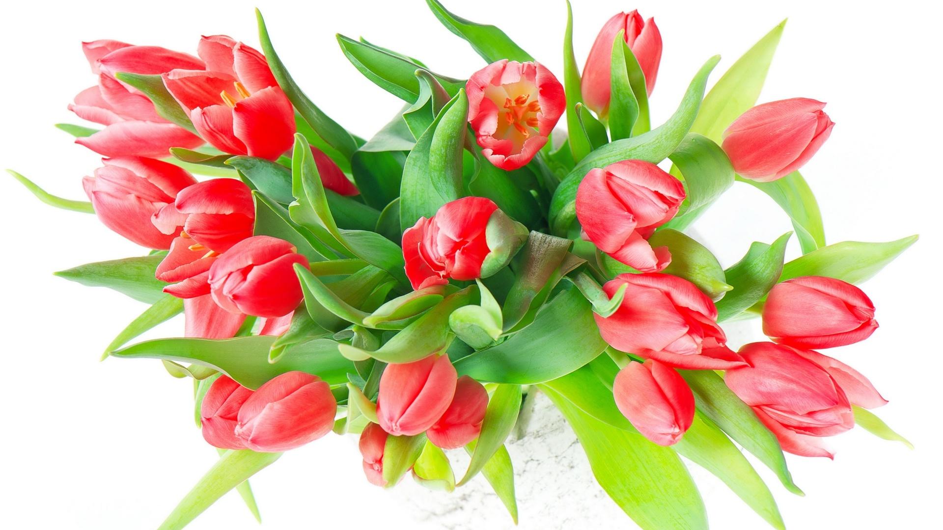 картинки цветов на 8 марта красивые на прозрачном фоне заведении одновременно может