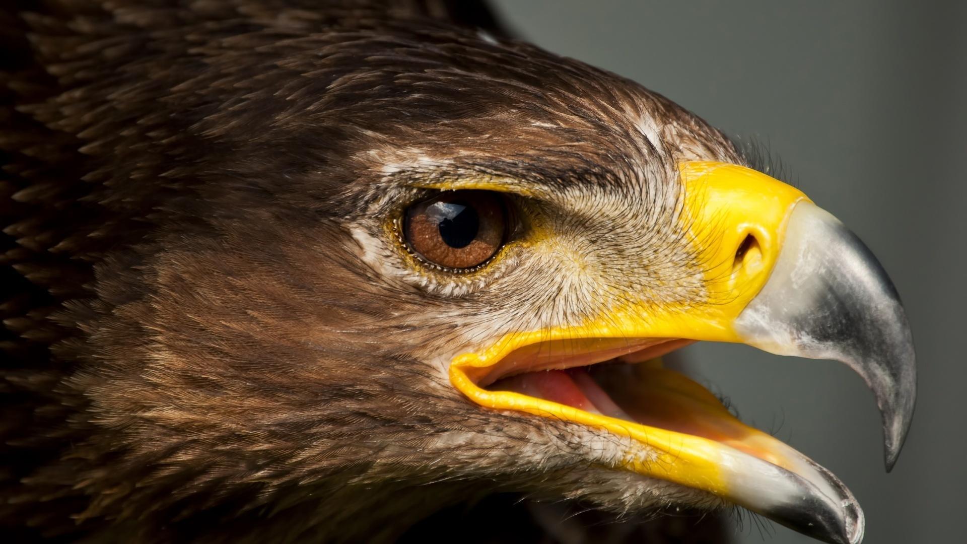счастью, картинки агрессивных орлов видеть, кто