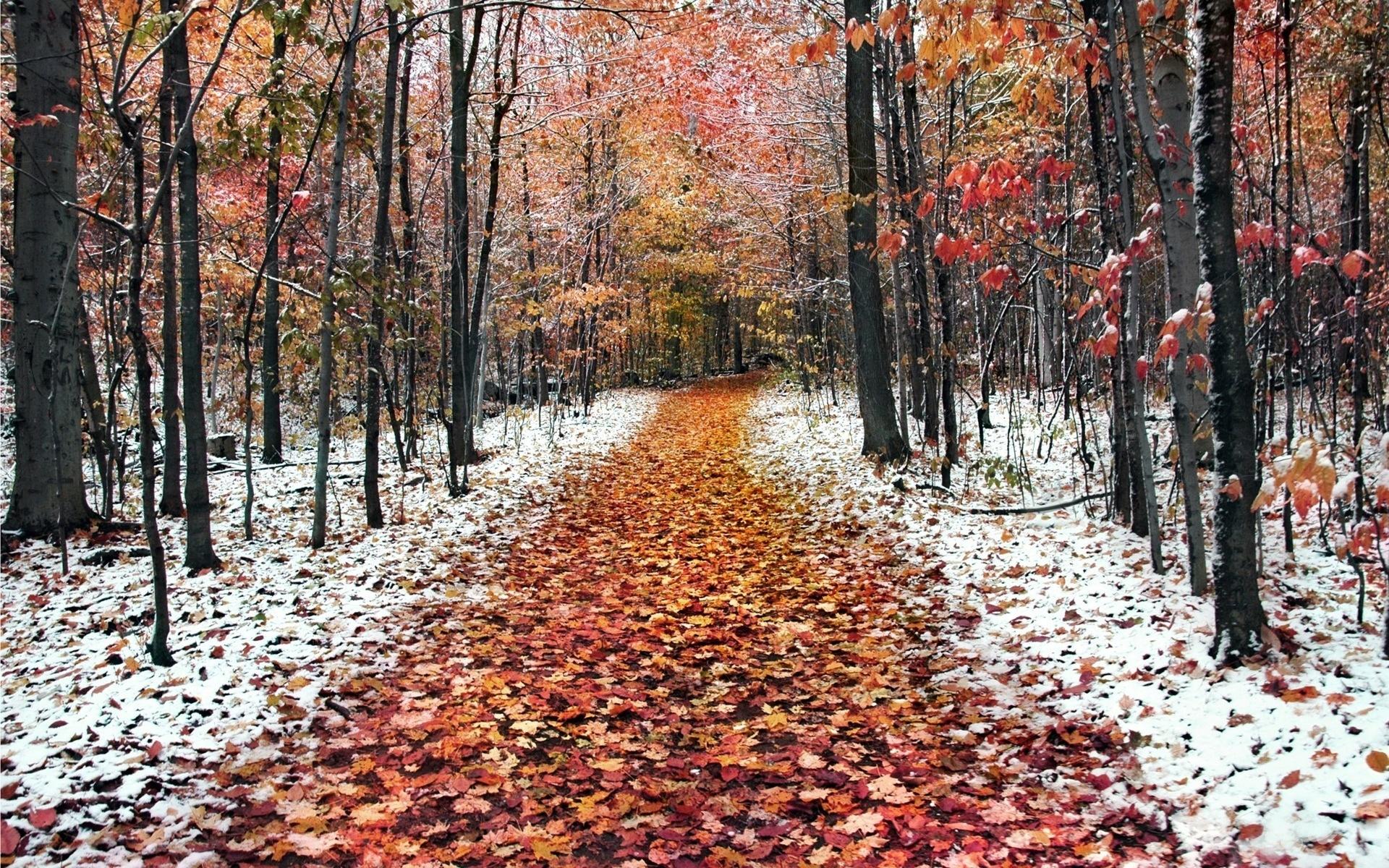 картинки про природу осень и зиму обладает повышенным