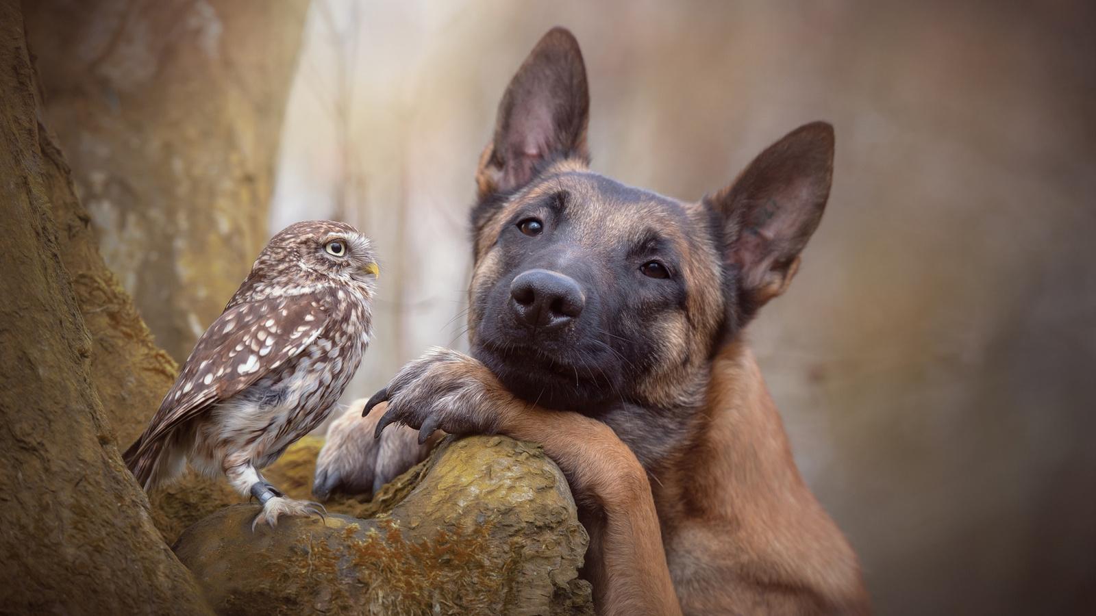 Тему новогодняя, прикольные картинки животных друзей