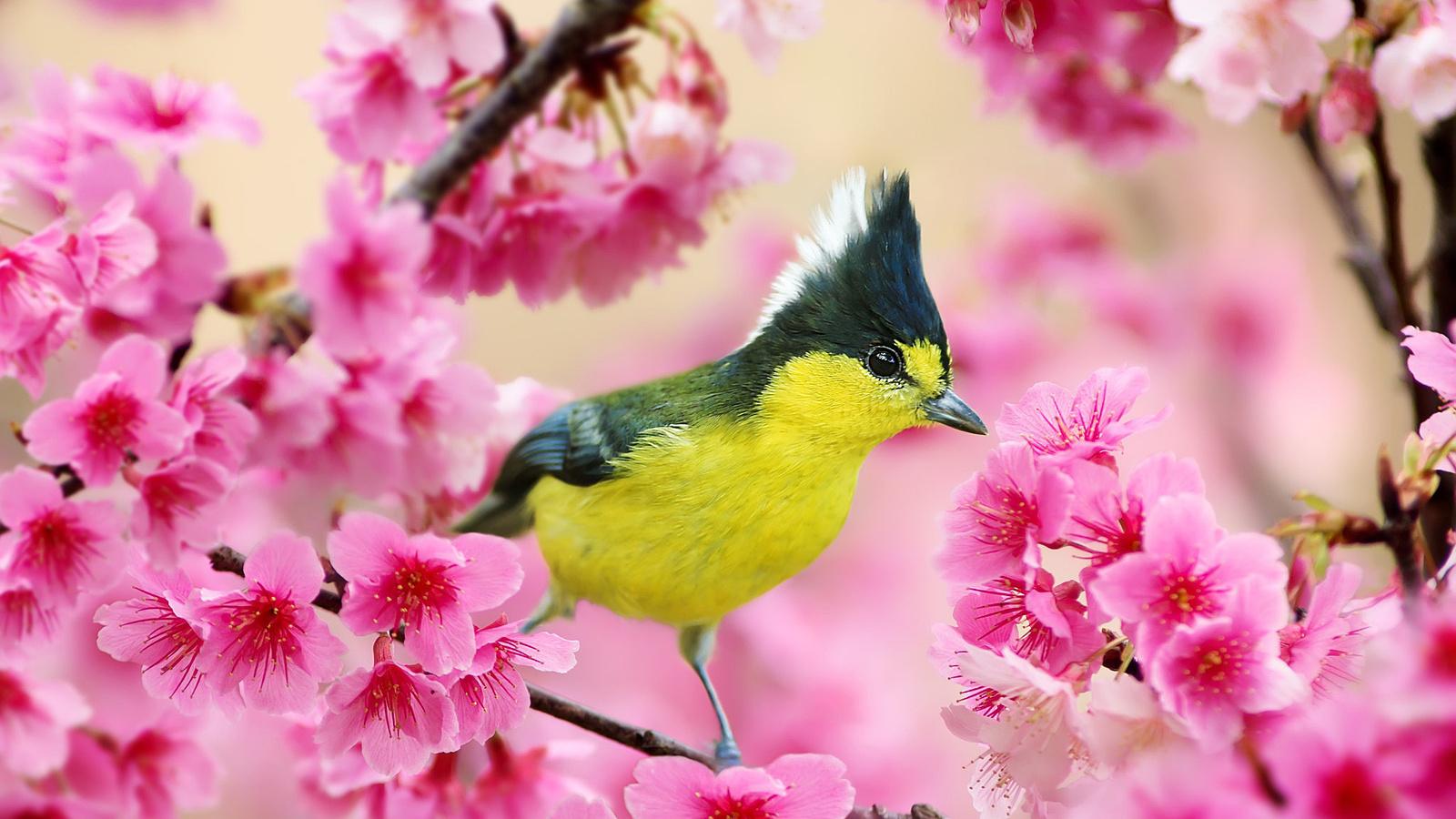 Самые красивые картинки весны, молодую девушку днем