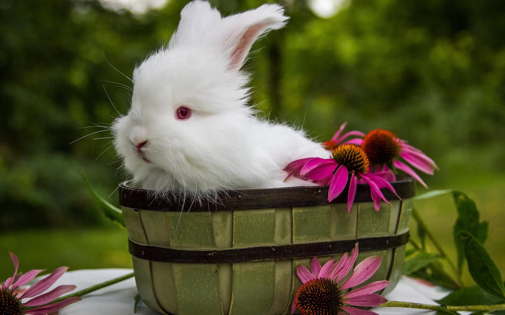 Цветы животные фото картинки