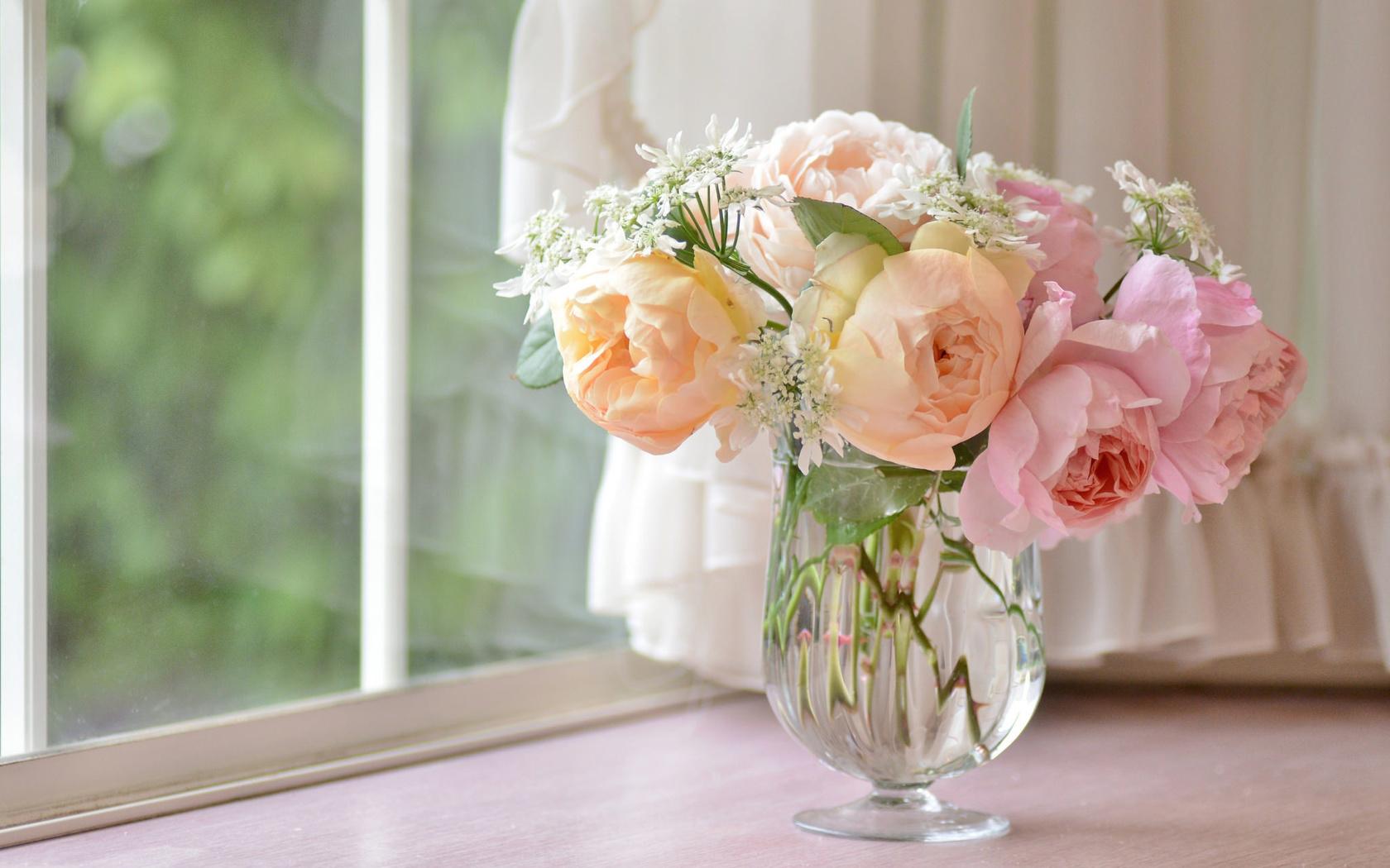 картинка роза на подоконнике снижение