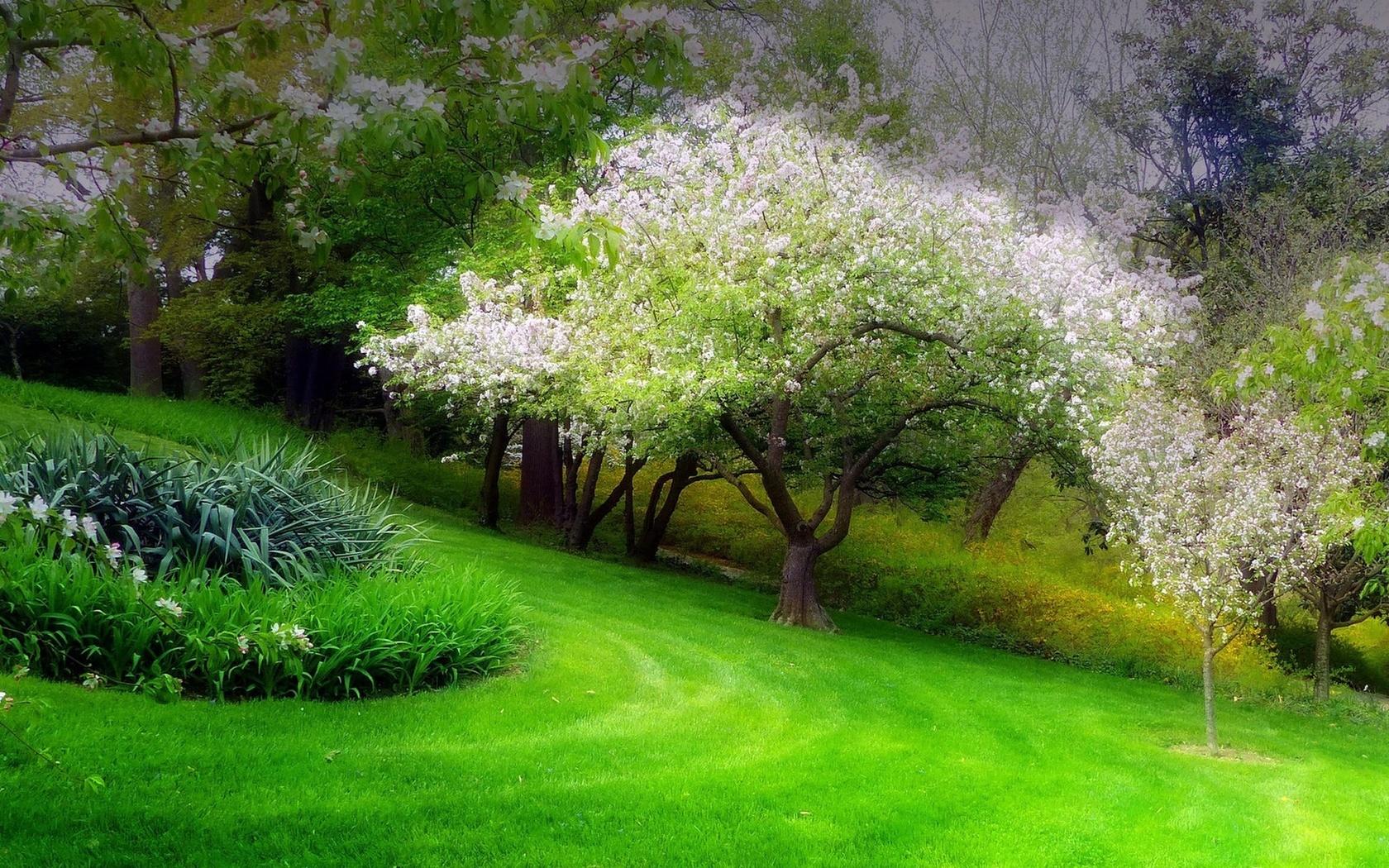 красивые весенние сады картинки удерживает салоне именно