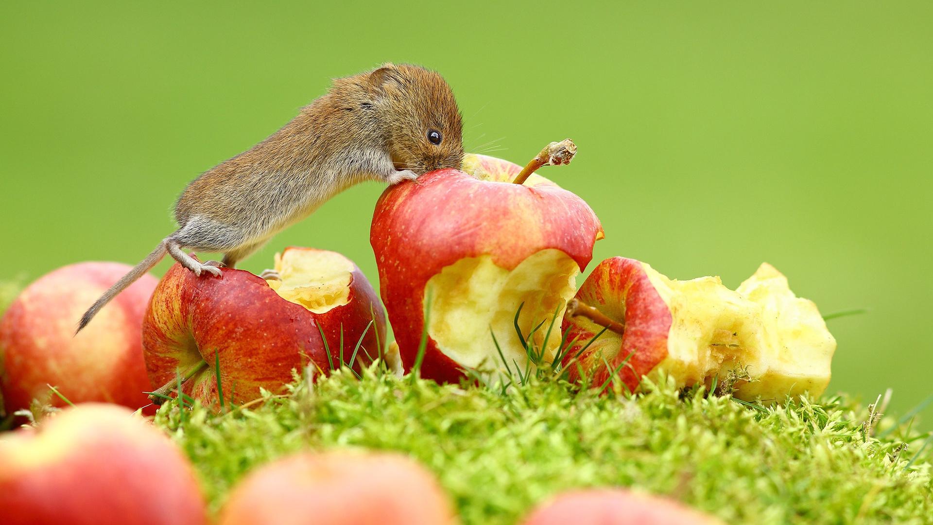 красивые картинки животных и фруктов очередной день пребывания