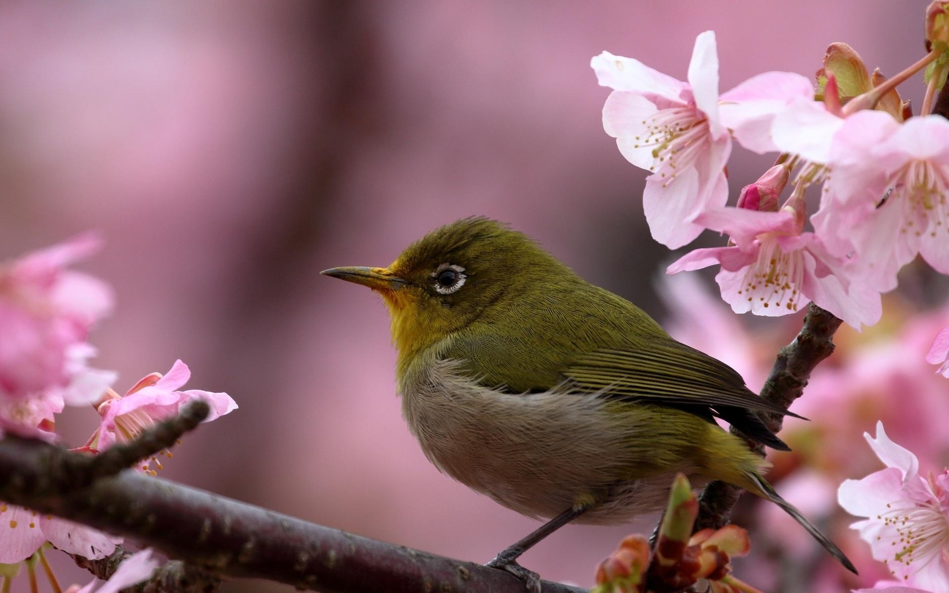 Классные весенние картинки с птицами