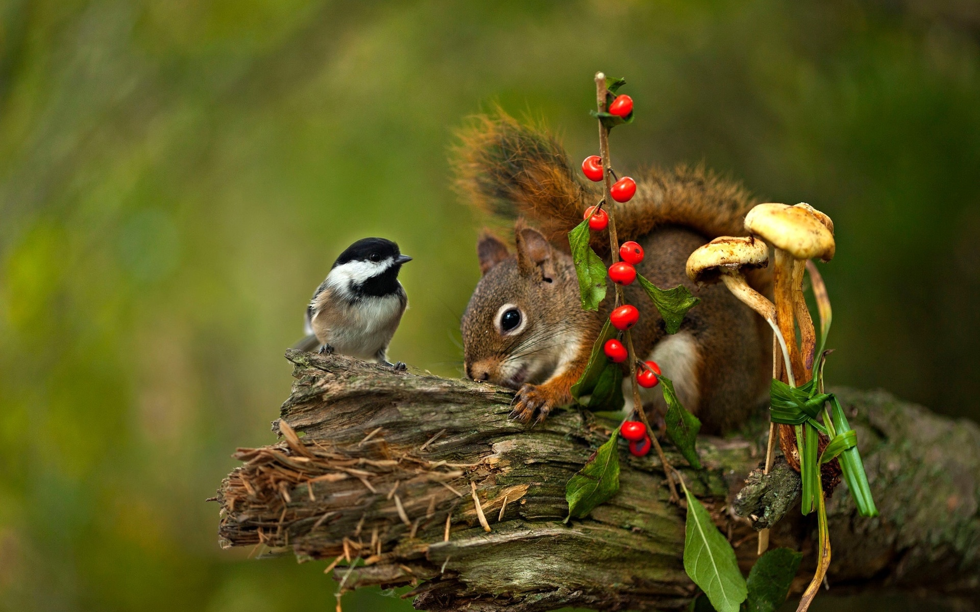 Животные и птицы картинка