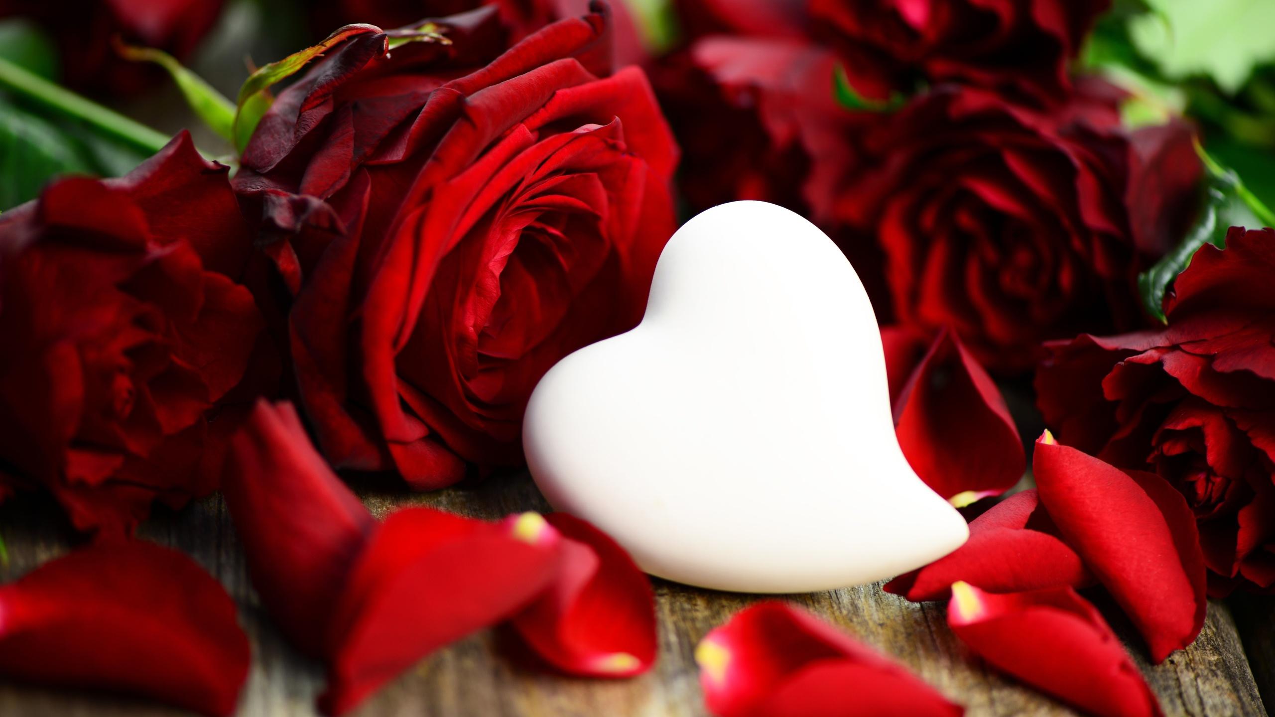 Цветы любви картинки красивые