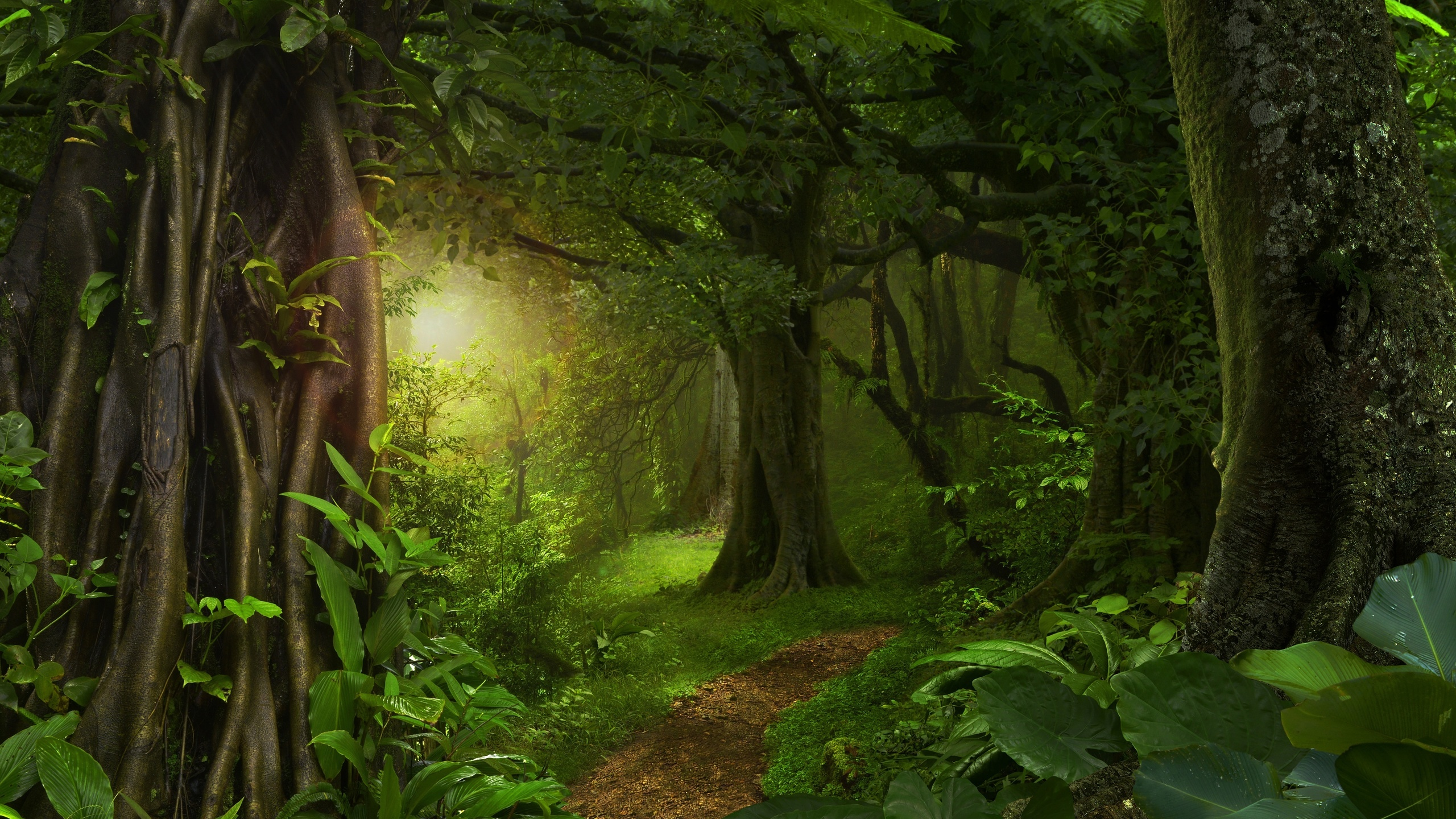 сказочный лес фотографии сейчас