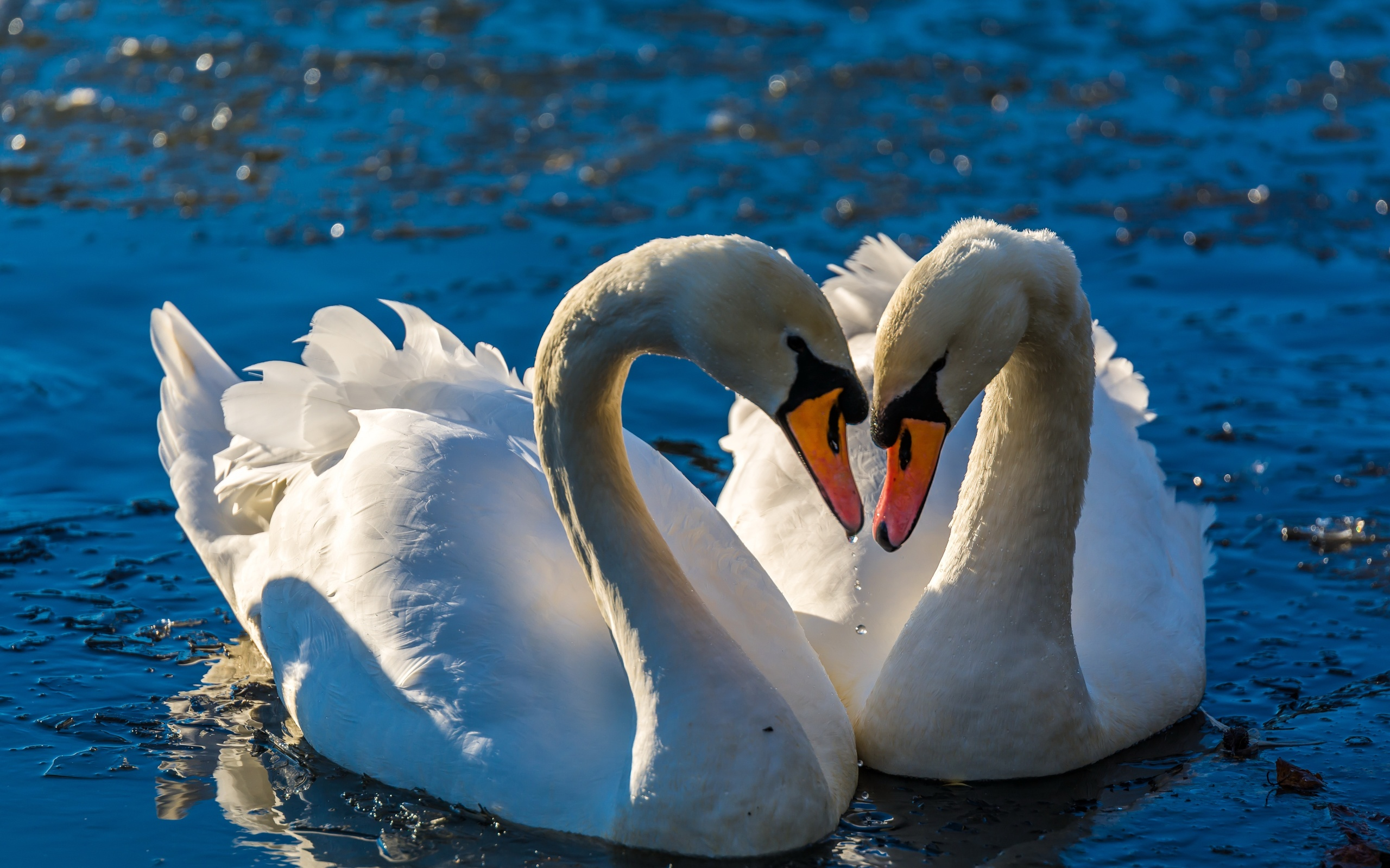 Картинки о любви птиц