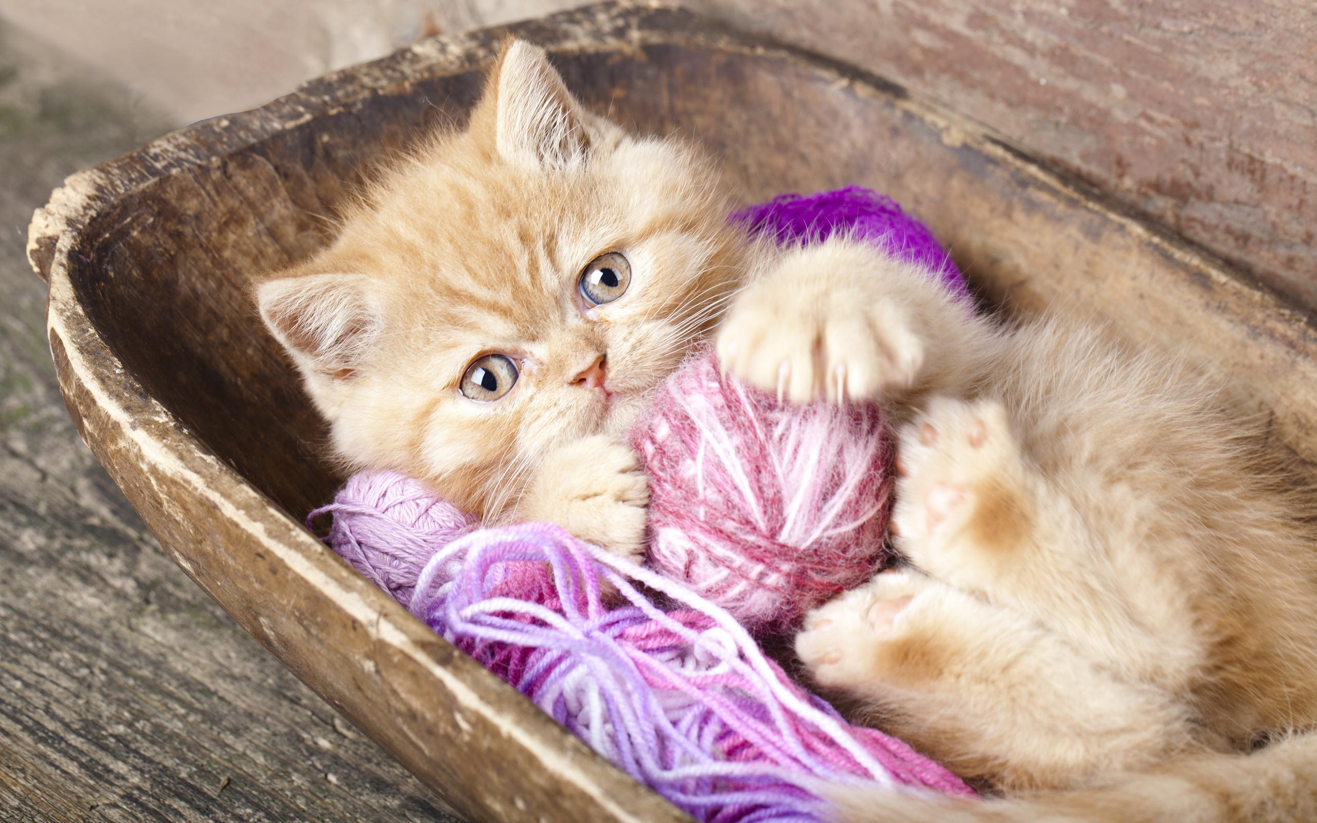 Видео про котят картинки, картинки