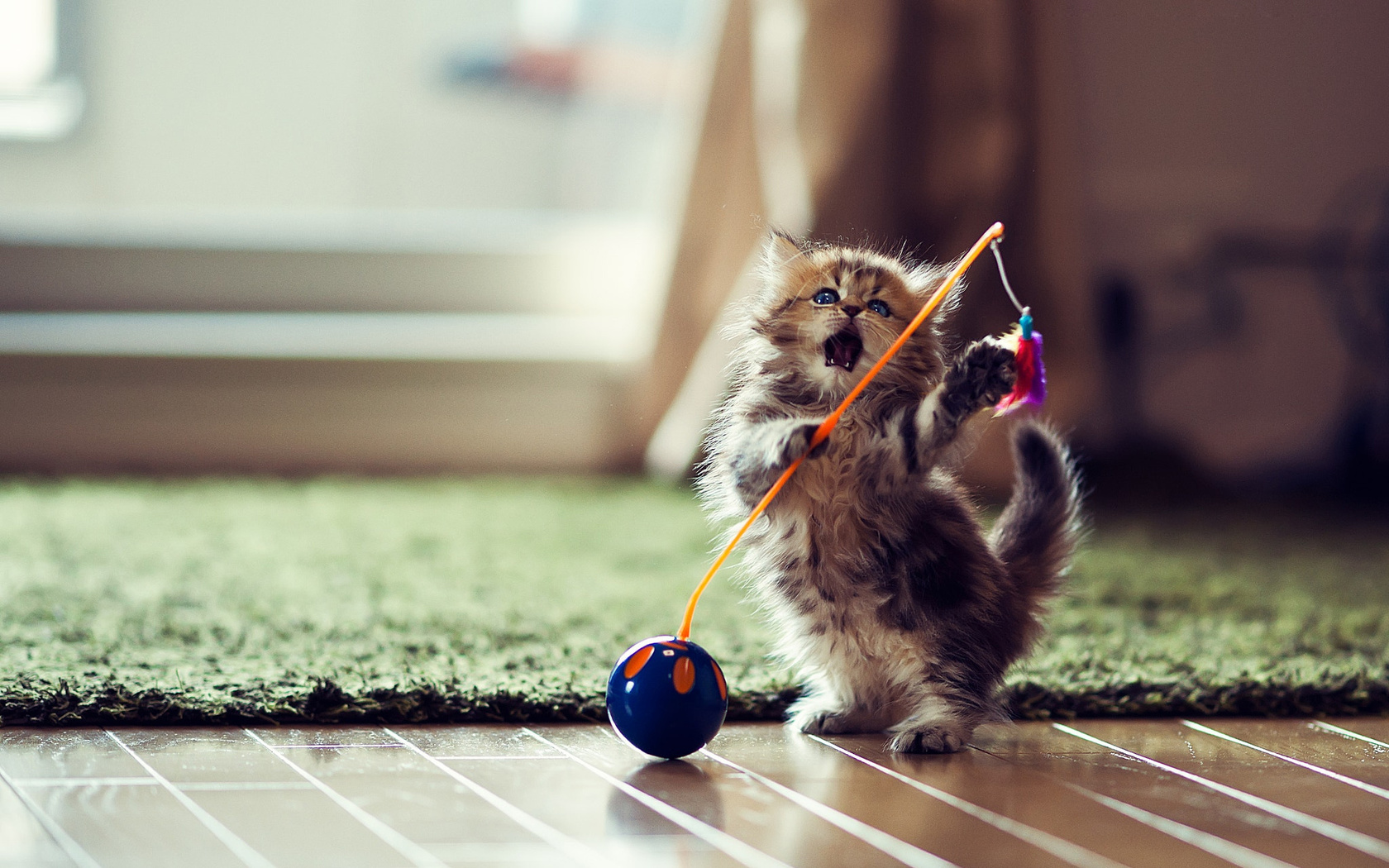 Картинках, самый красивый котенок картинки смешные