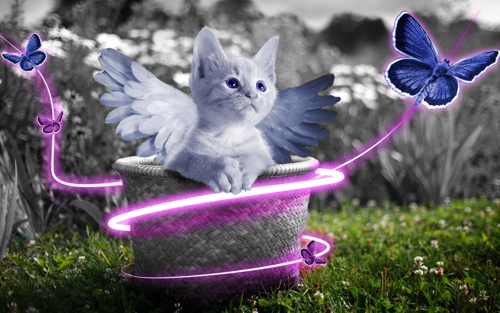 анимационные картинки котята с крыльями крошечной