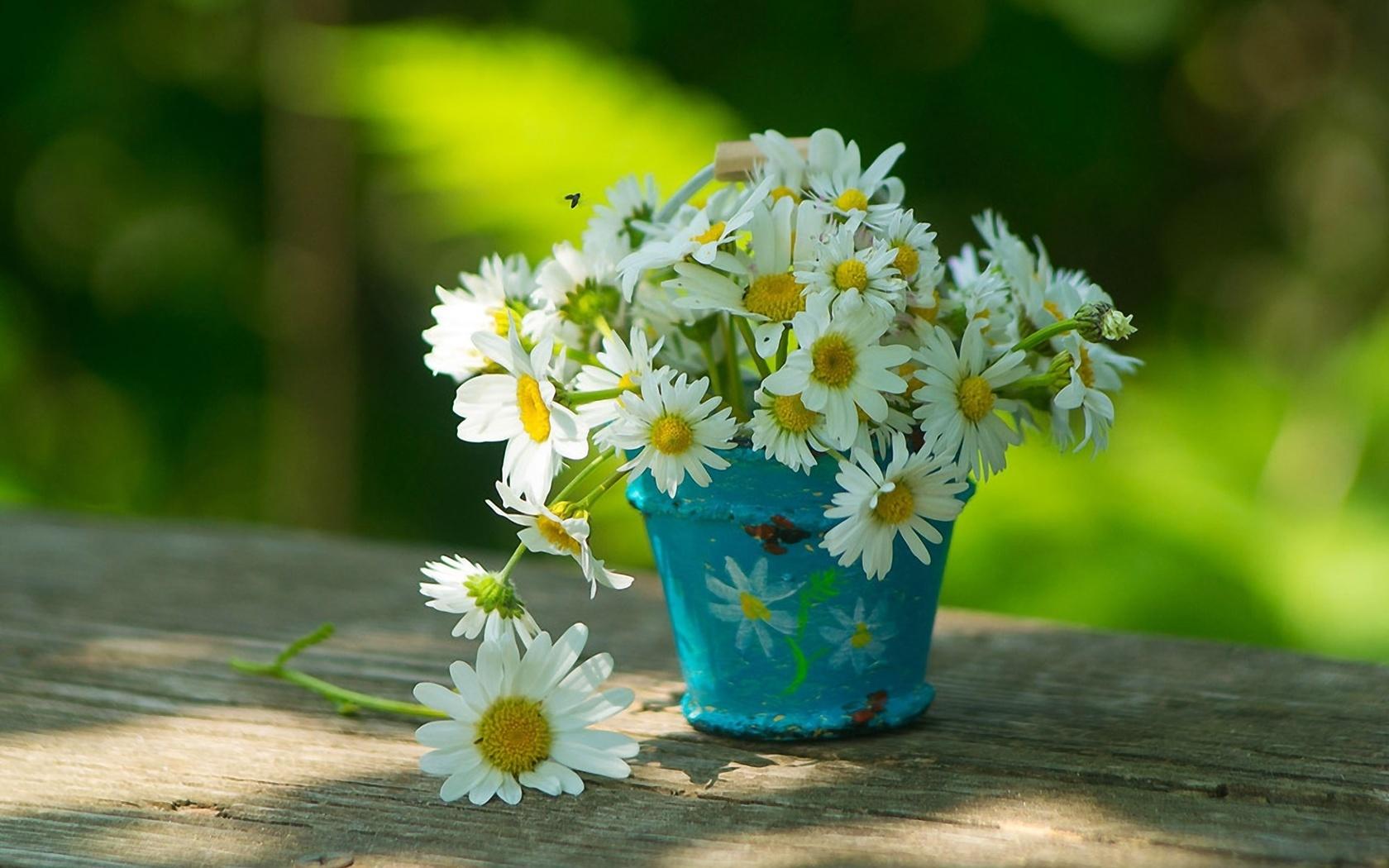 Красивые картинки с цветами ромашками