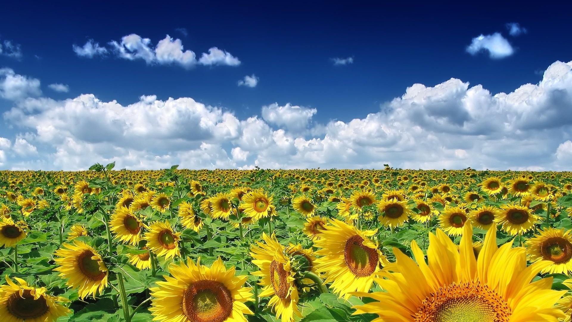 летние картинки для групп многих выращивание этой