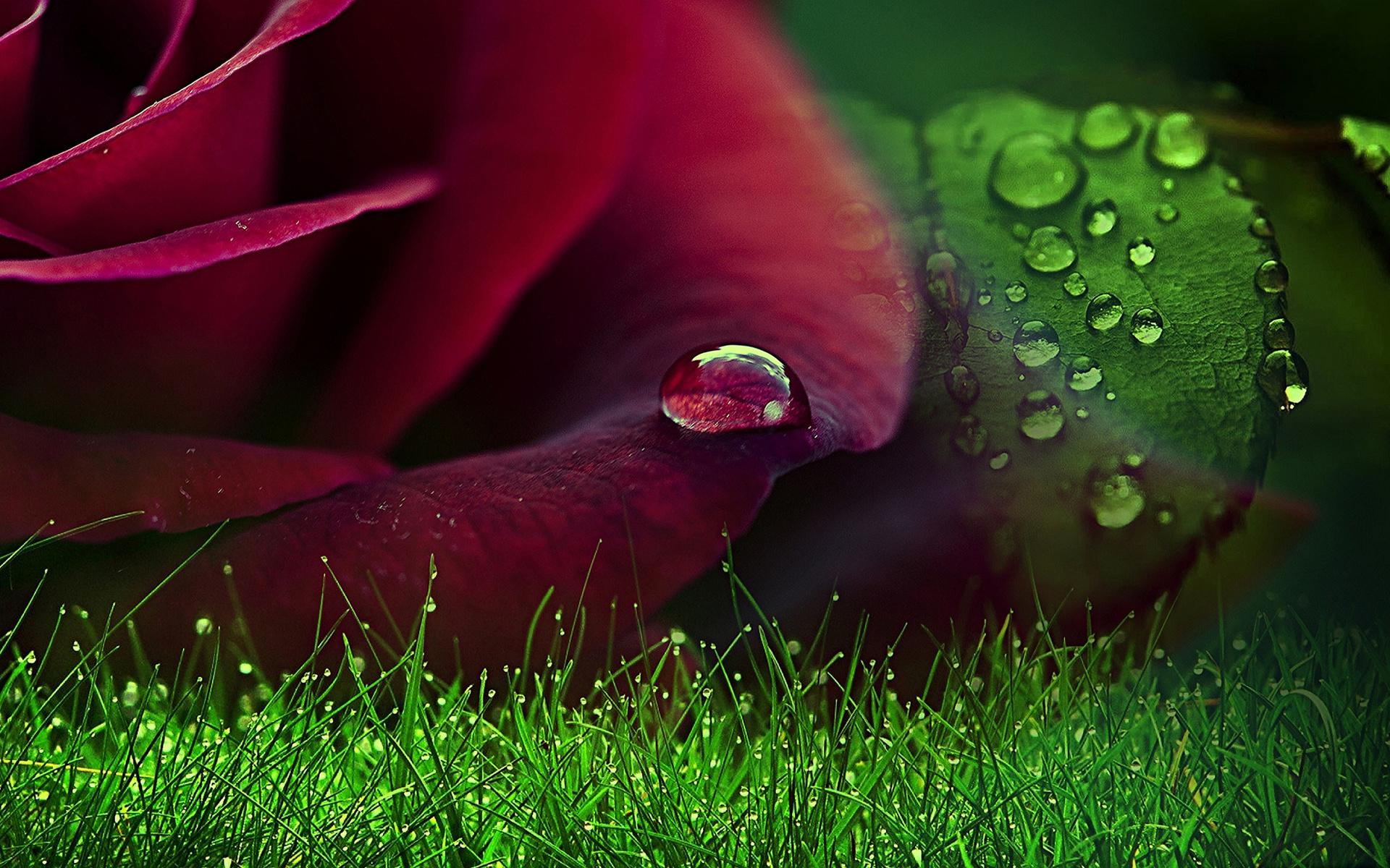 оды картинки цветы с каплями росы вполне можете сделать