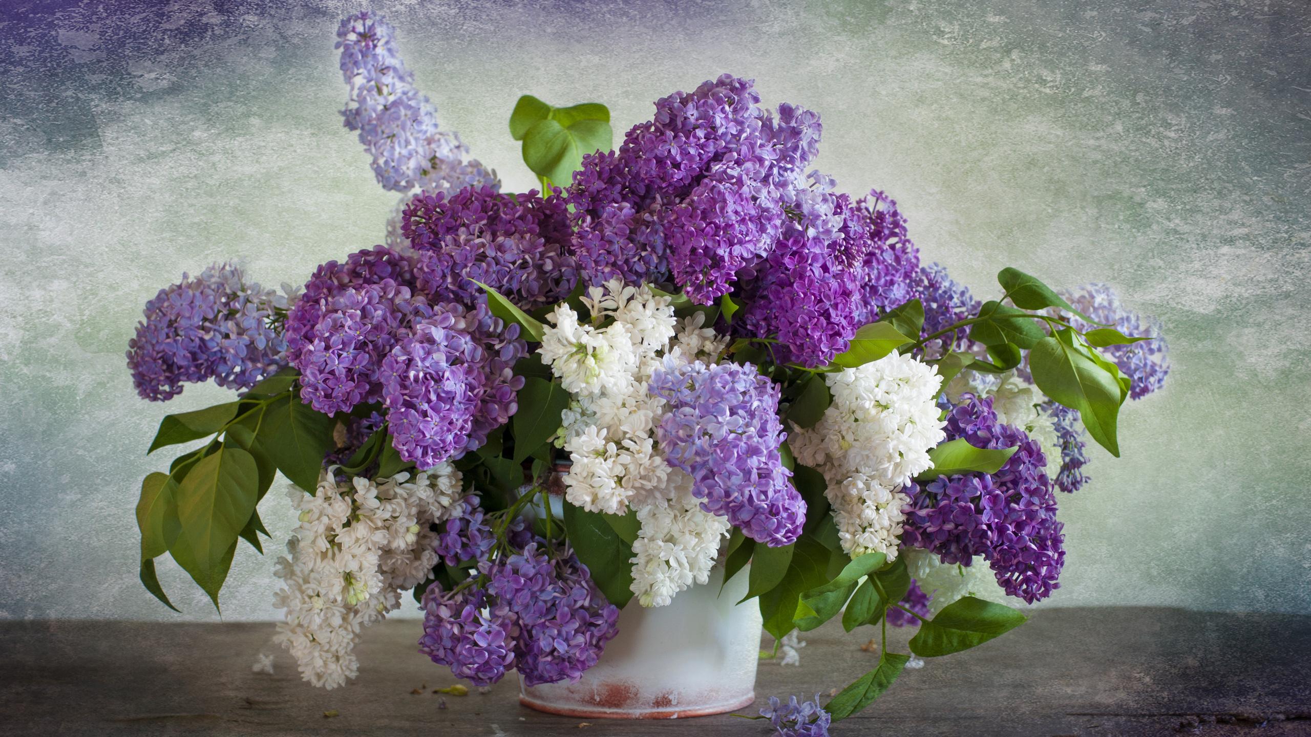 Картинки цветы сирень красивые, прикольные картинки