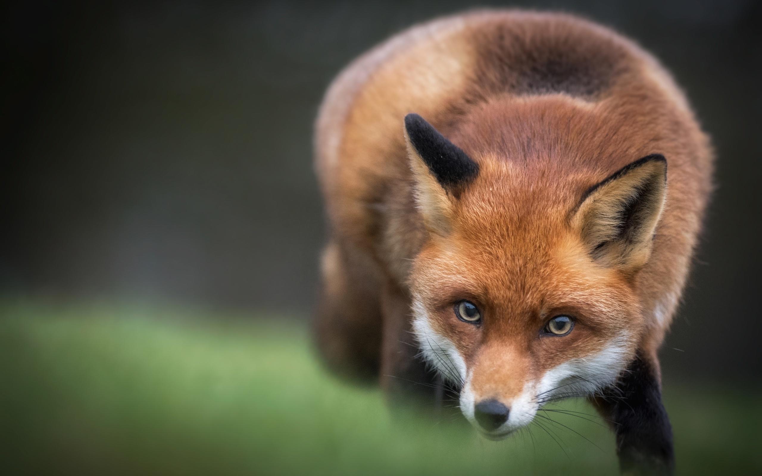 День, картинка с лисичкой