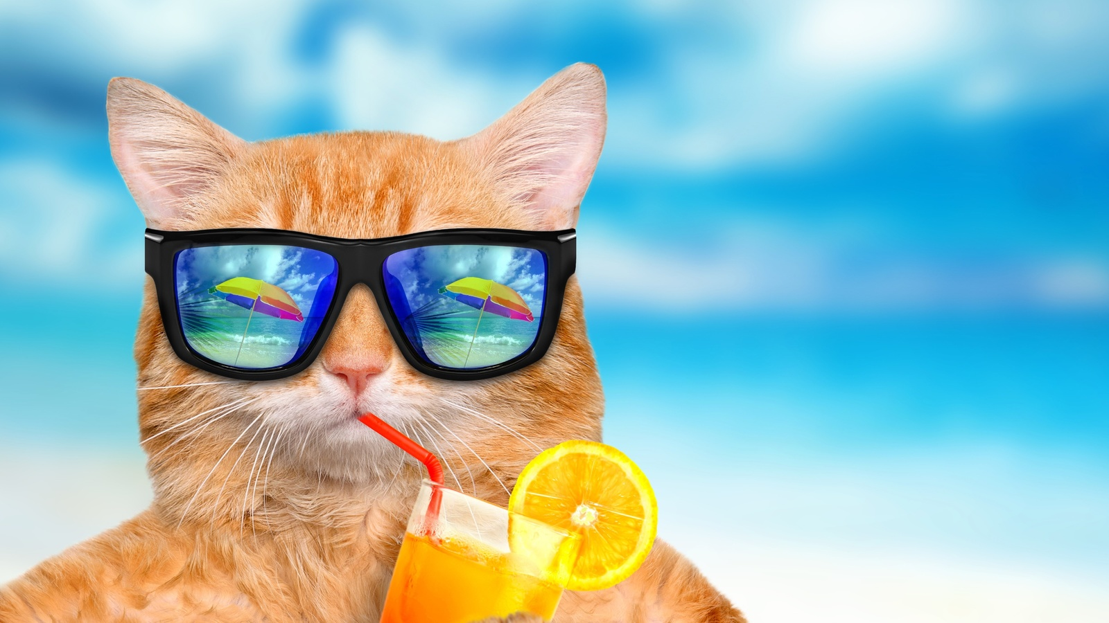 школы картинки скоро отпуск море лето жара гибрид, хотя