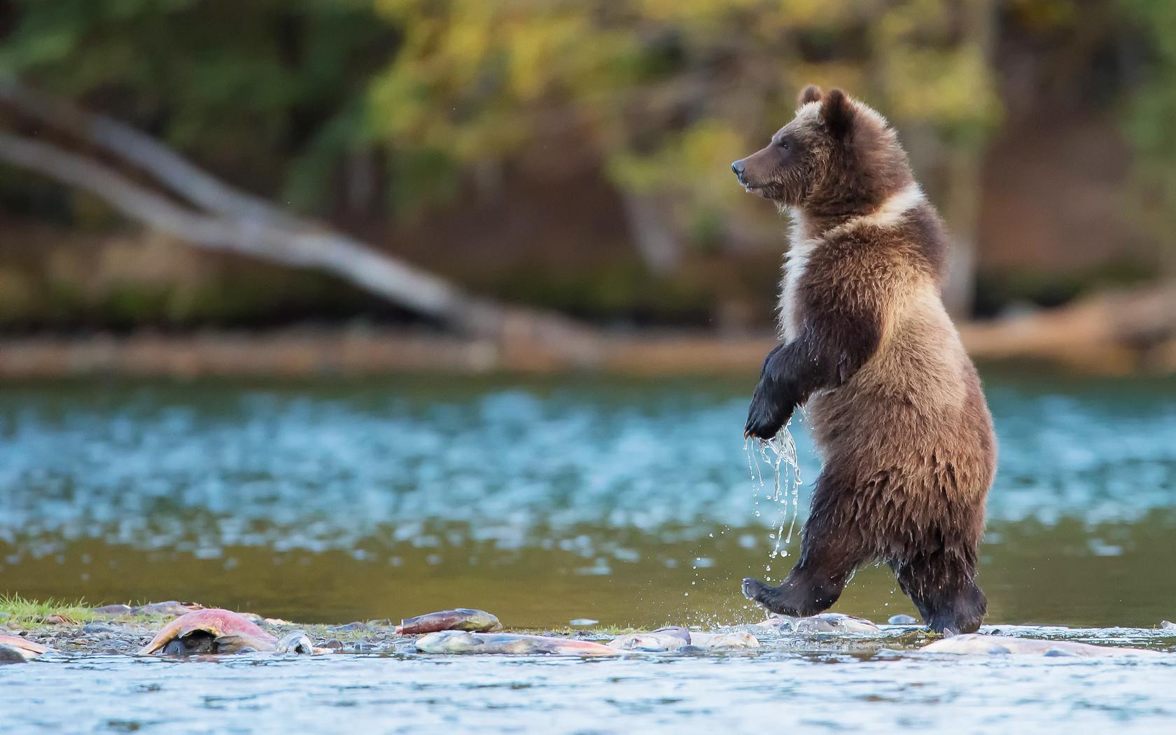 Красивые картинки с животными и природой прикольные, днем рождения