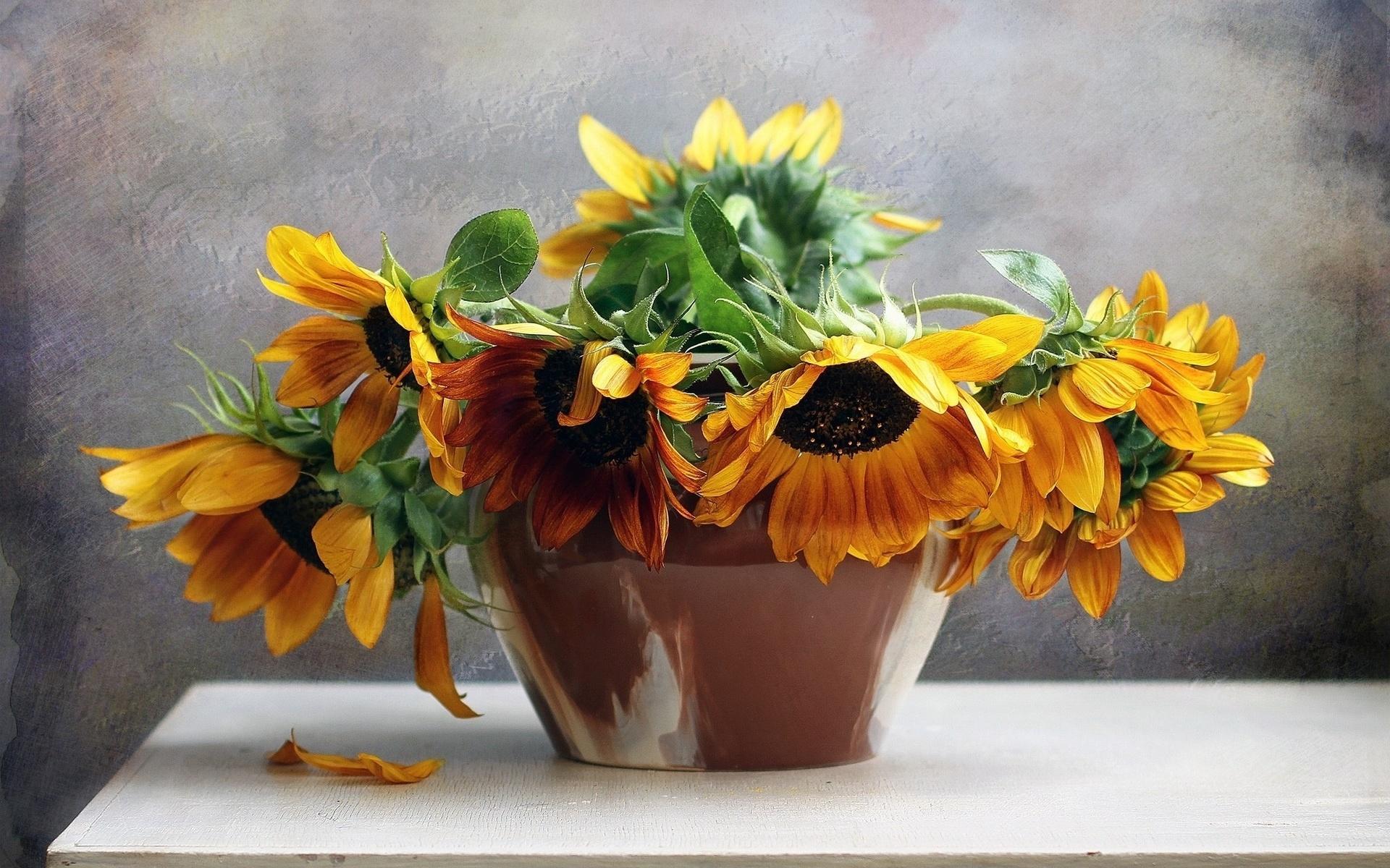 снимки фото картинки цветы подсолнухи в вазах раз нас