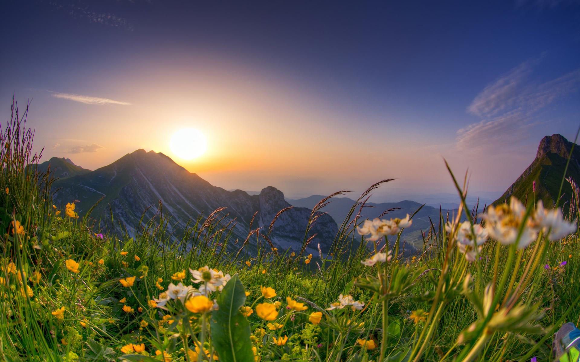 Альпийские луга картинки с добрым утром