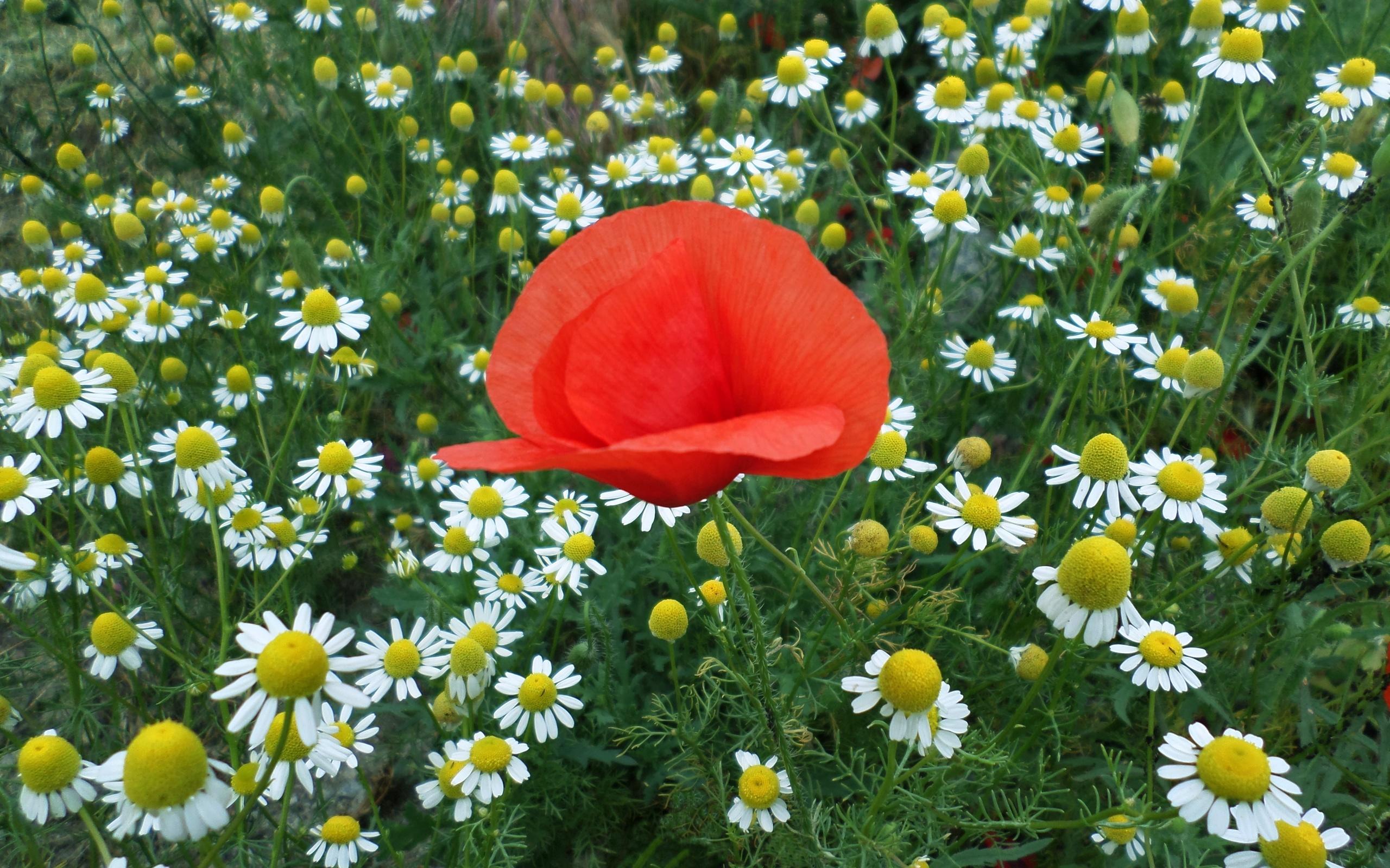 взгляд несведущего июньские цветы картинки знаете