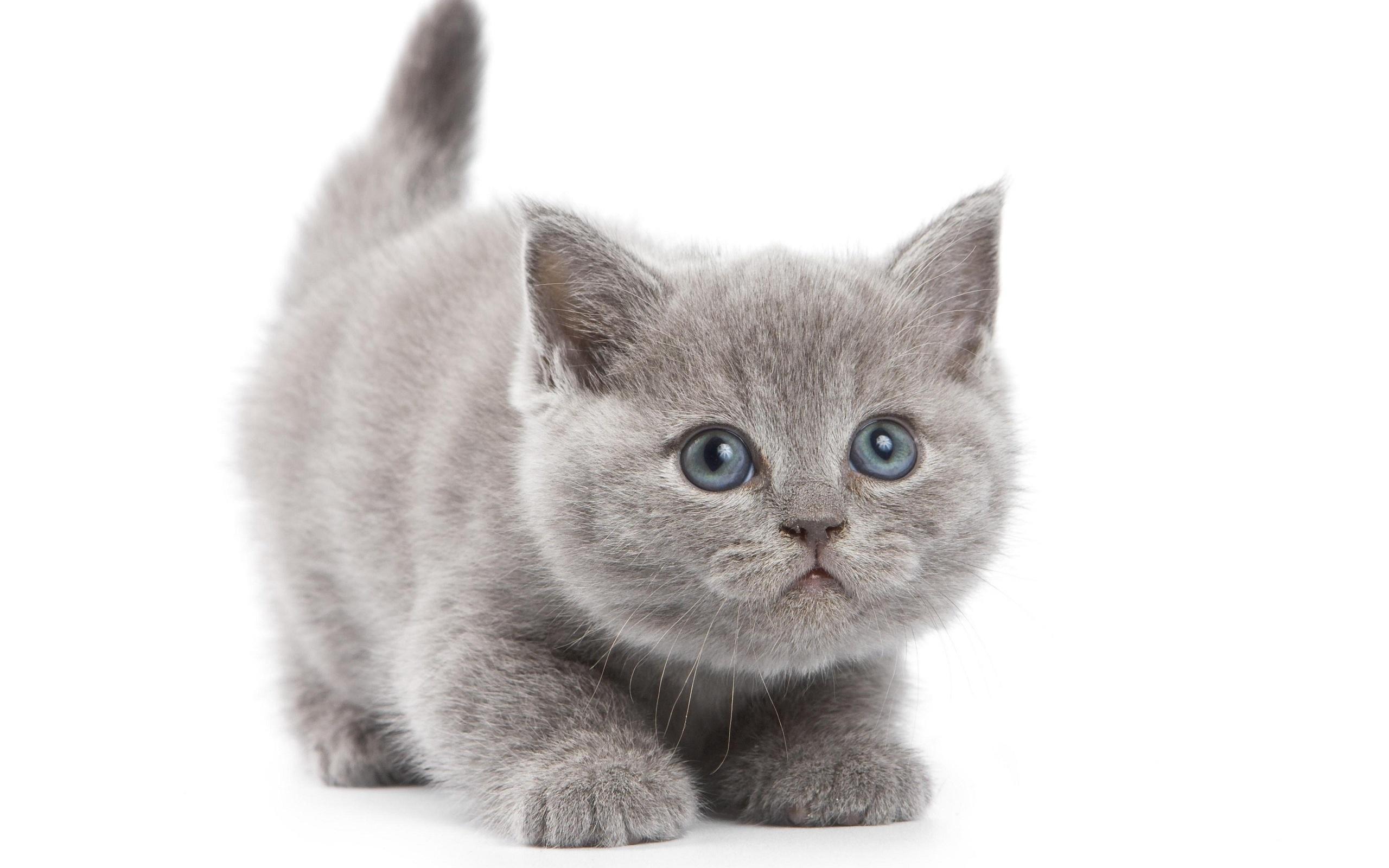 Котики картинки на белом фоне