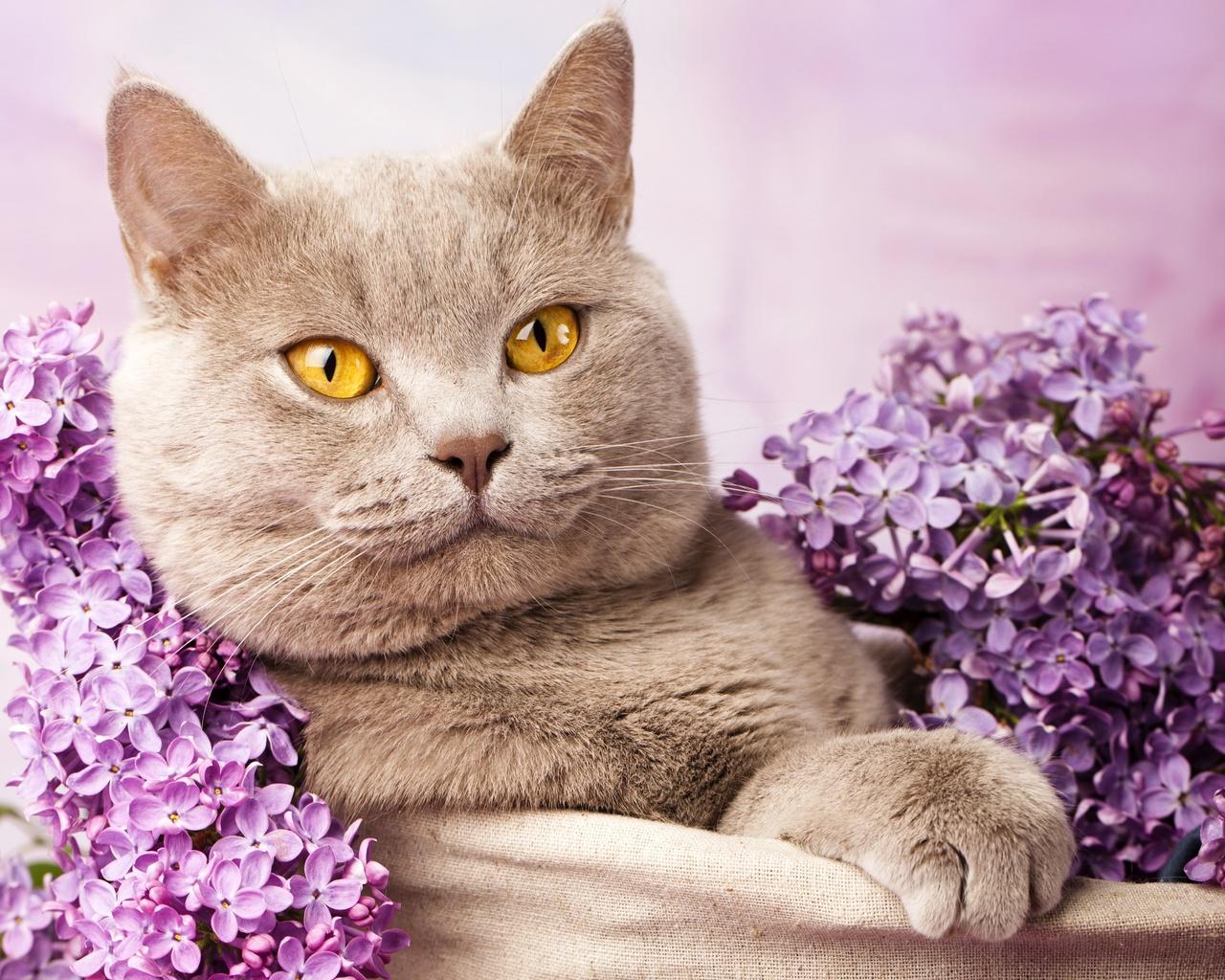 кошка цветы красиво фотография жители рассказали
