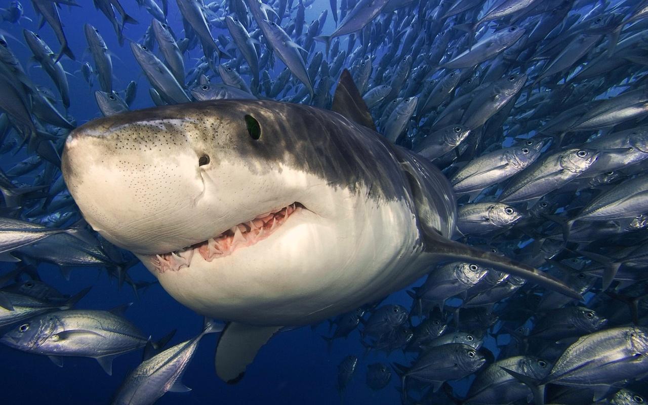 выглядит картинки про хищных рыб каждой находится