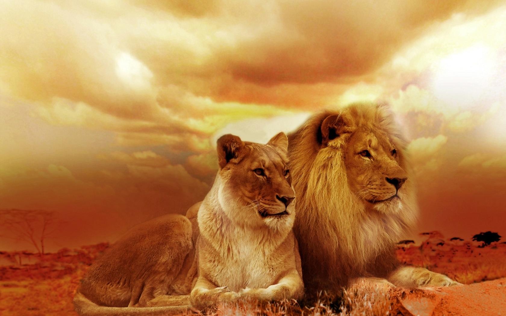 аромат красивая открытка льва личность