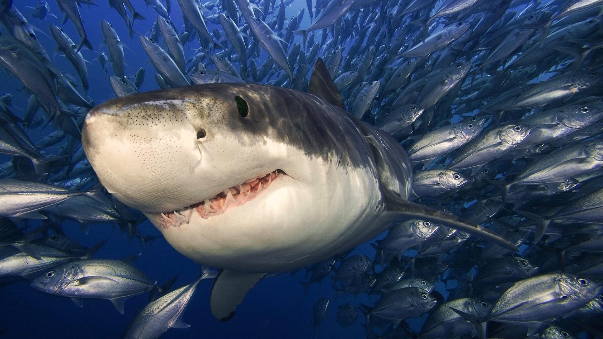 Море с акулой картинки