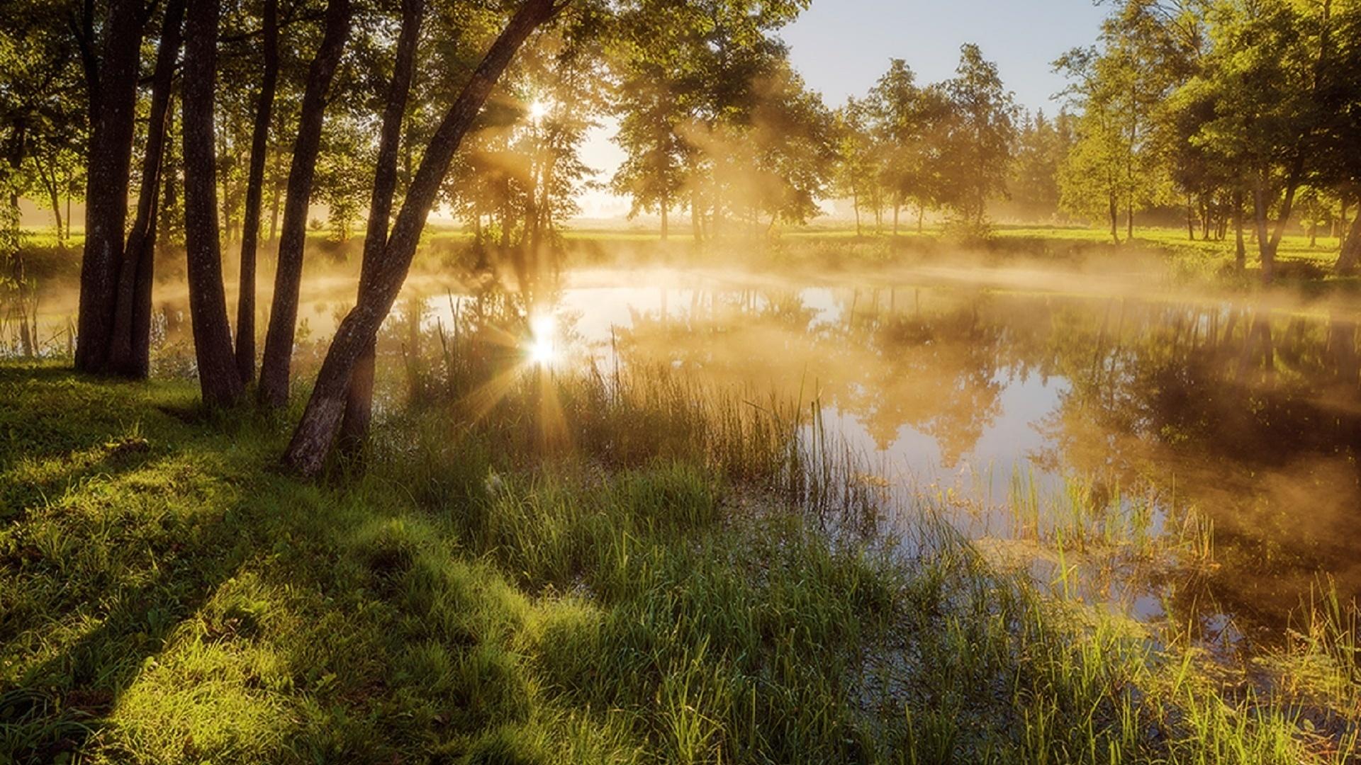 Картинки на тему летнее утро