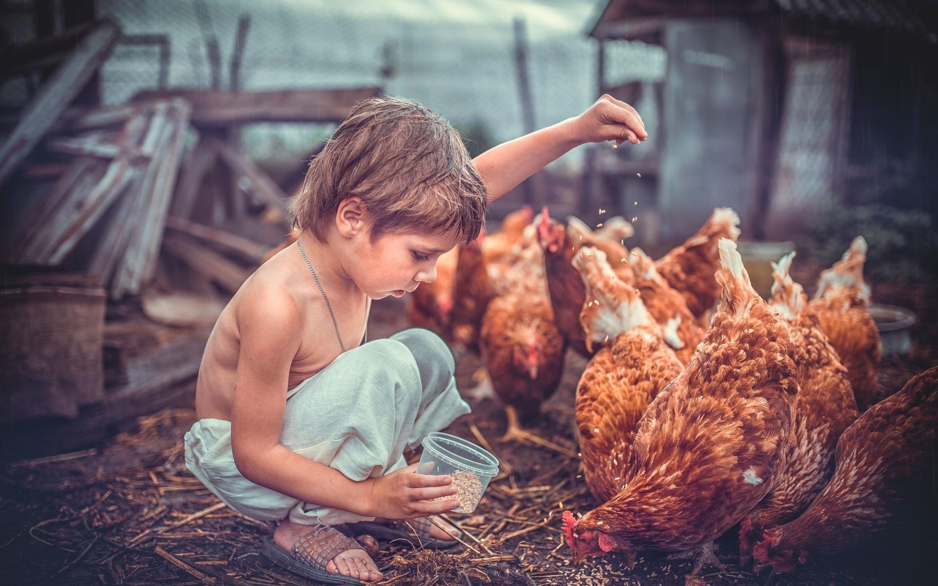 картинки человек кормит животных