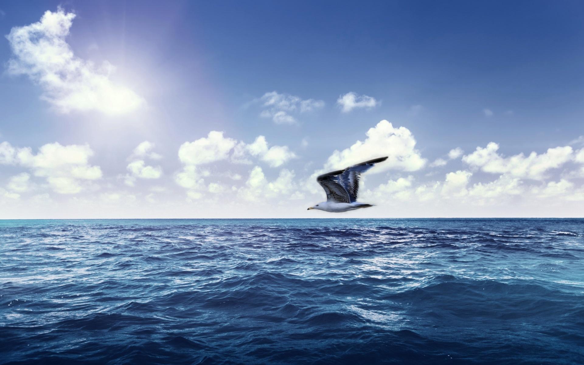 картинки море парус чайки лидировала последних минут
