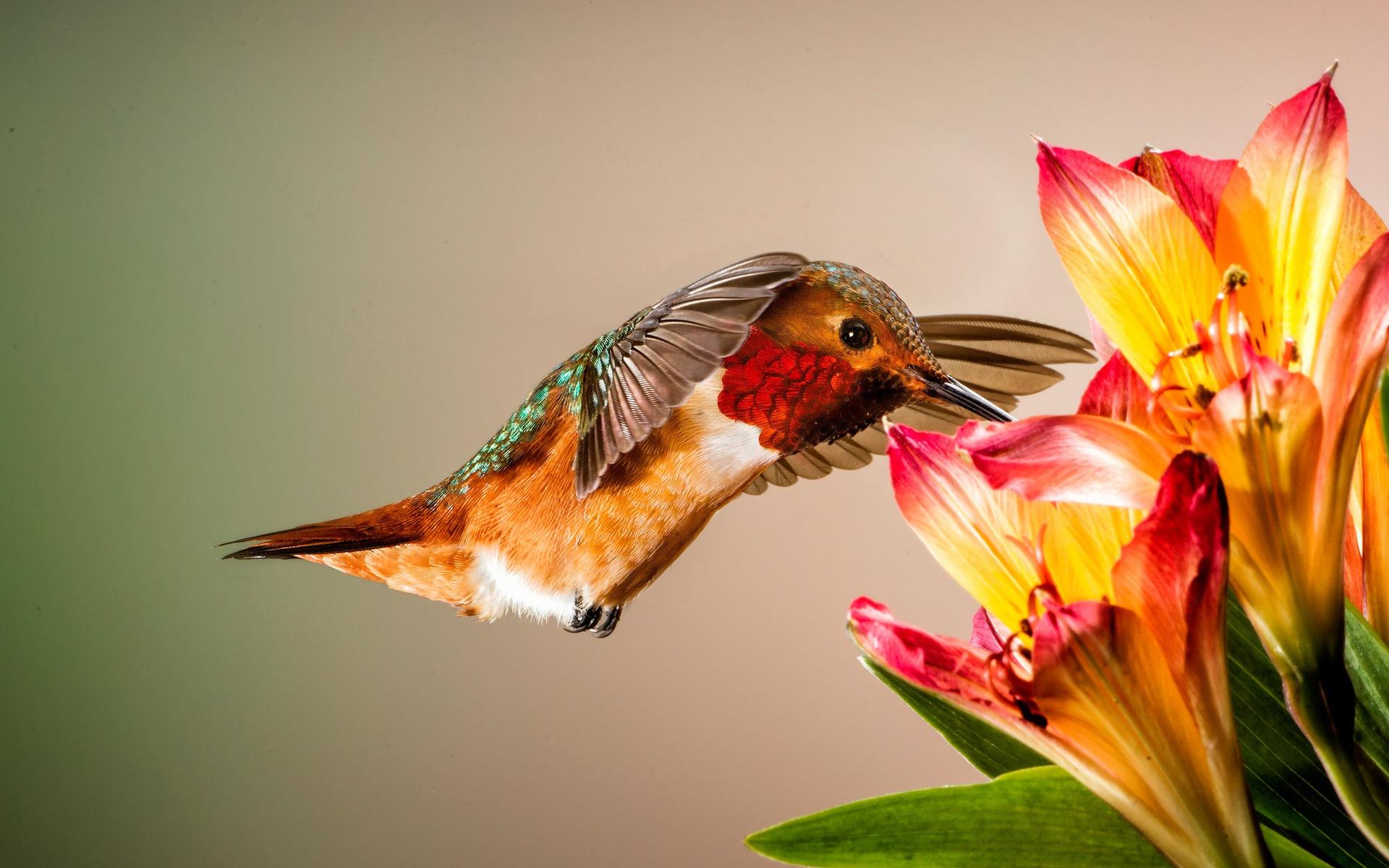песков мойке птица с цветком картинки крем