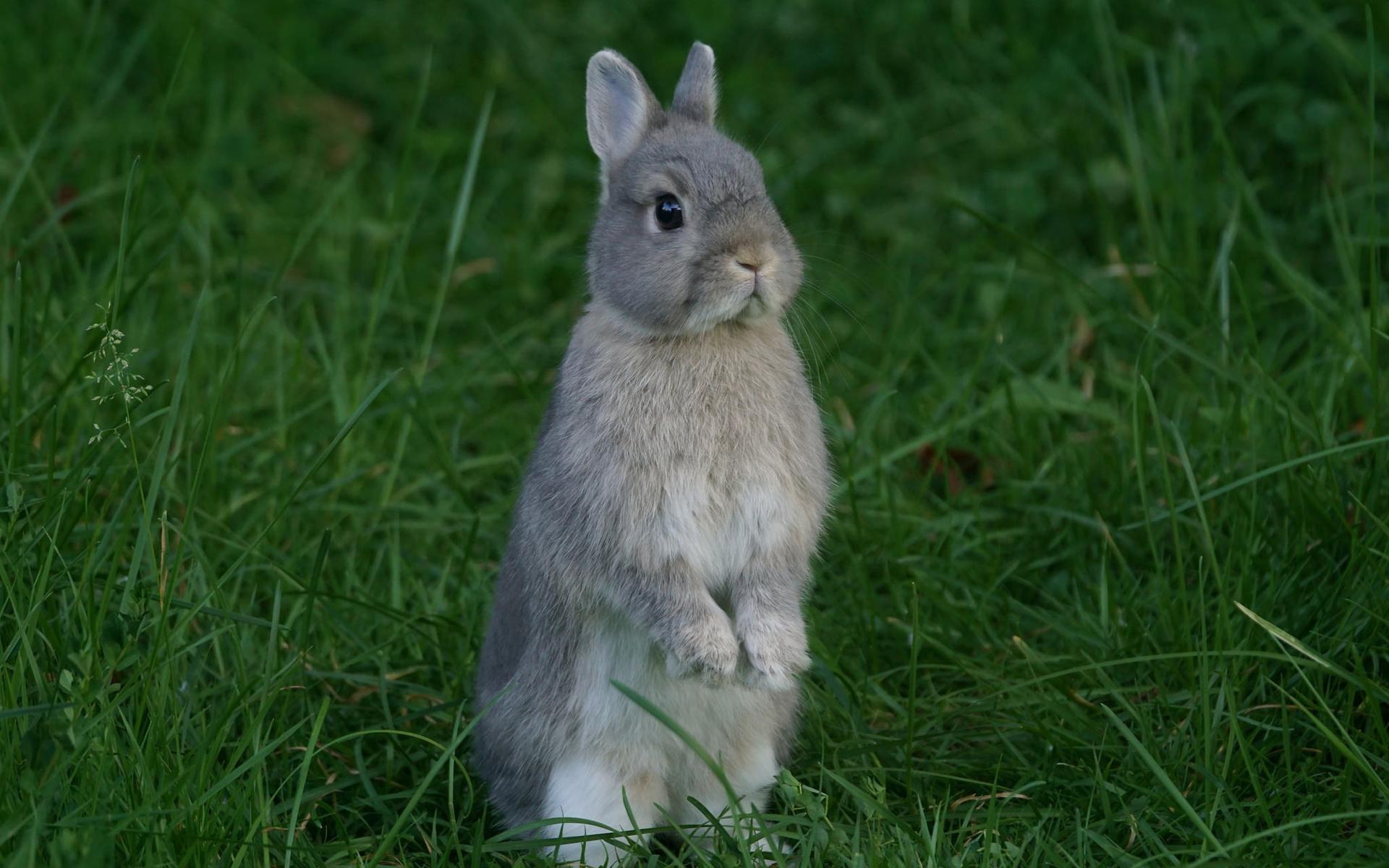 год картинка серого зайчика ближайшее