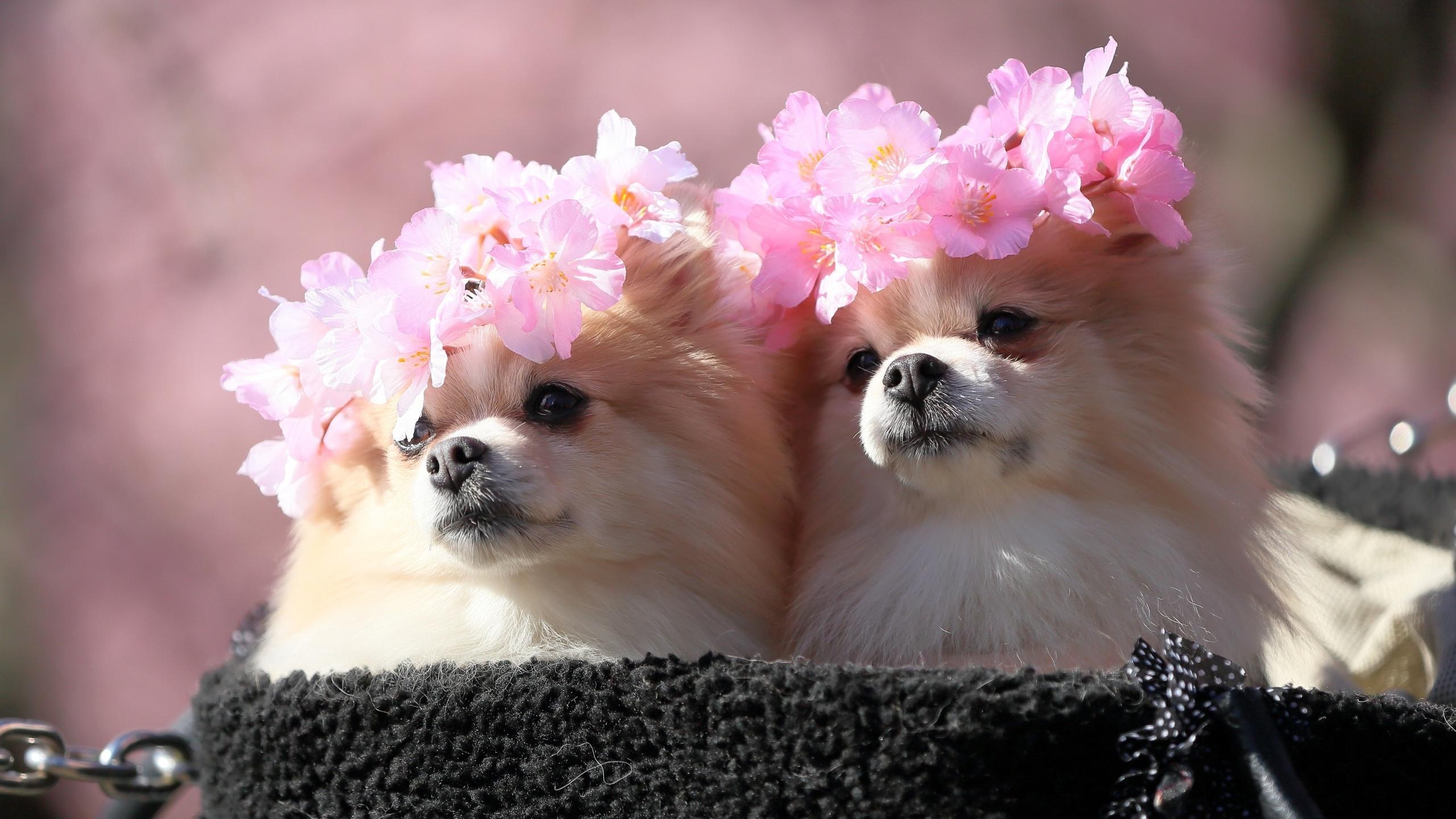 про очень милые картинки с цветами это бабцы, что