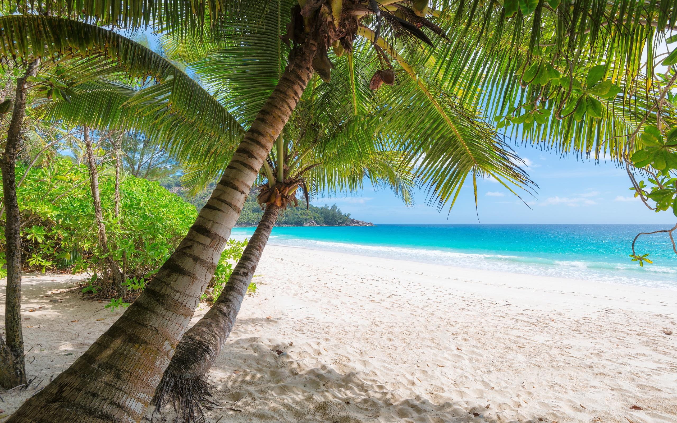 склонить пальмы природа картинки статье