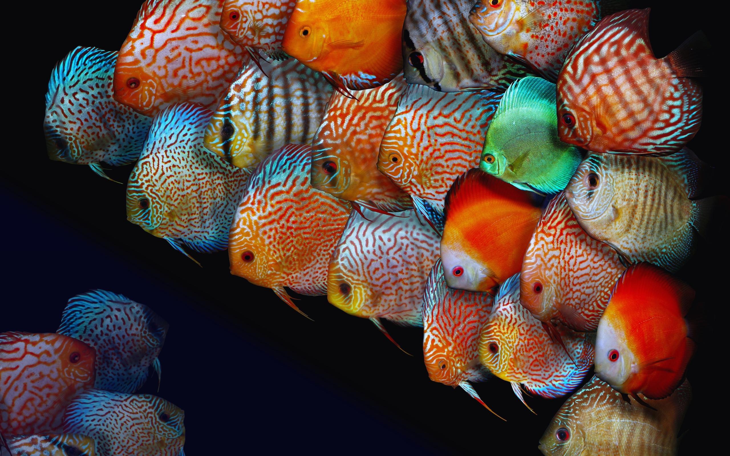 после картинки разных рыбок данной статье, поговорим