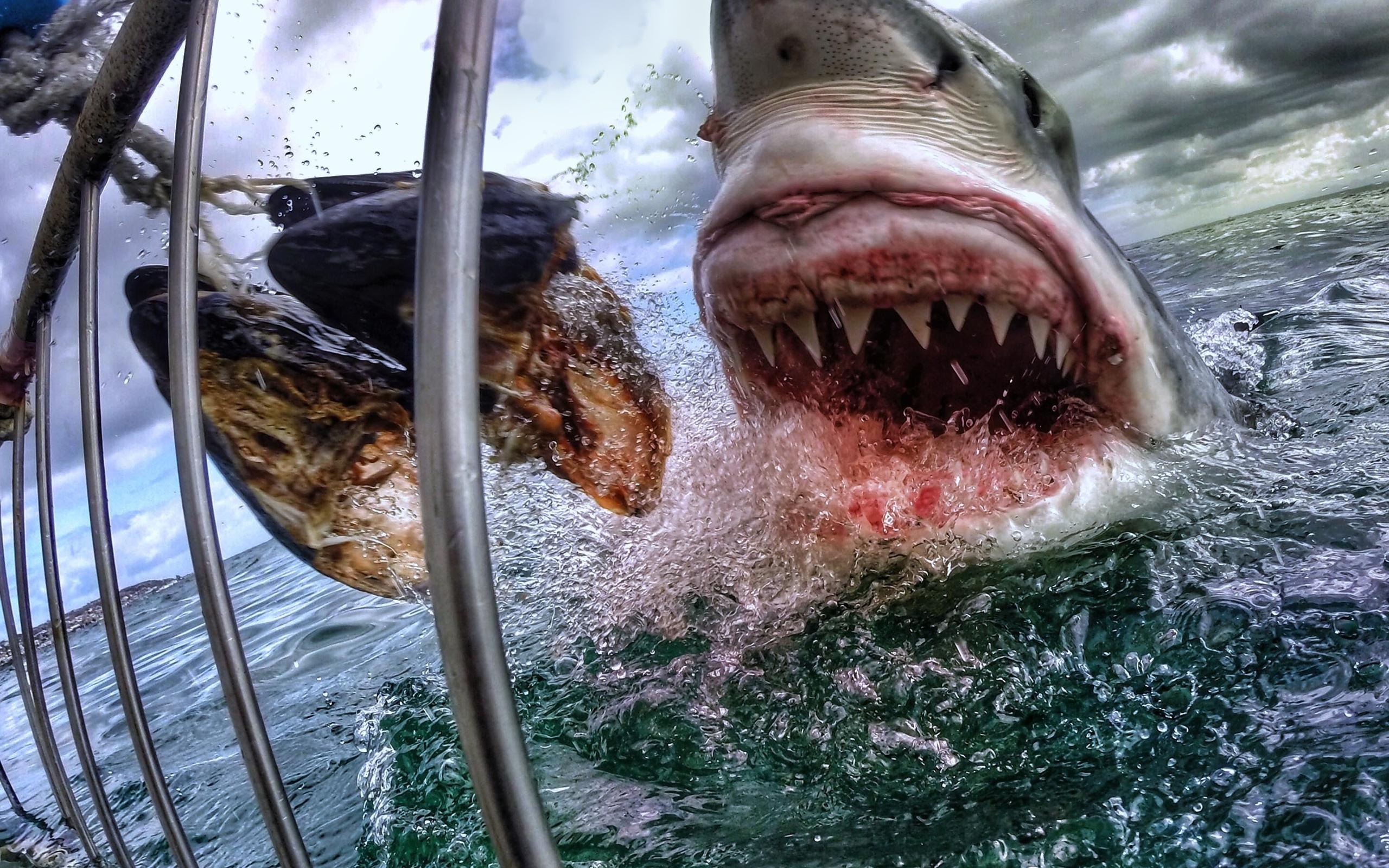 Картинки акула ест людей и рыб