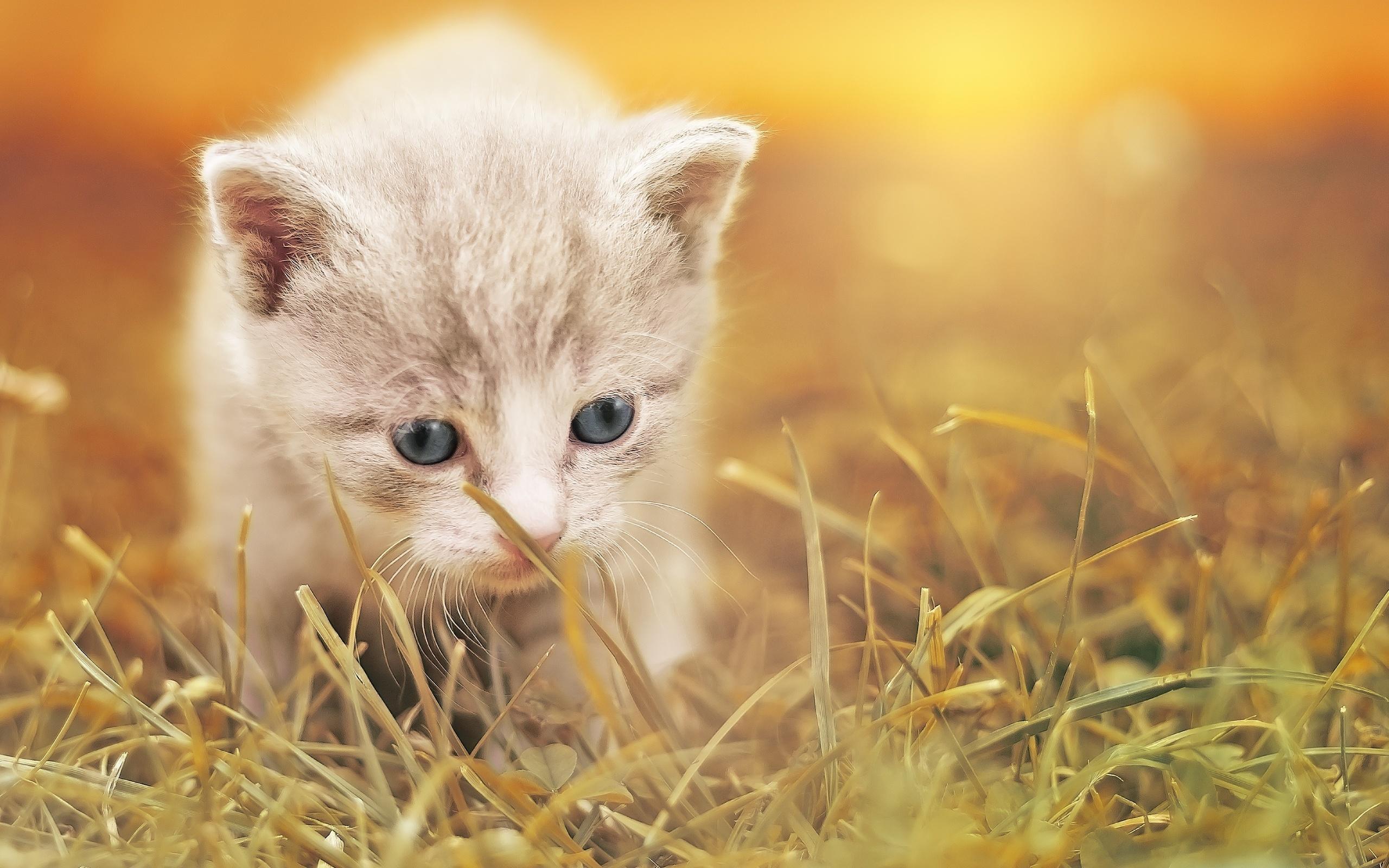 картинки зверушки котенок такое