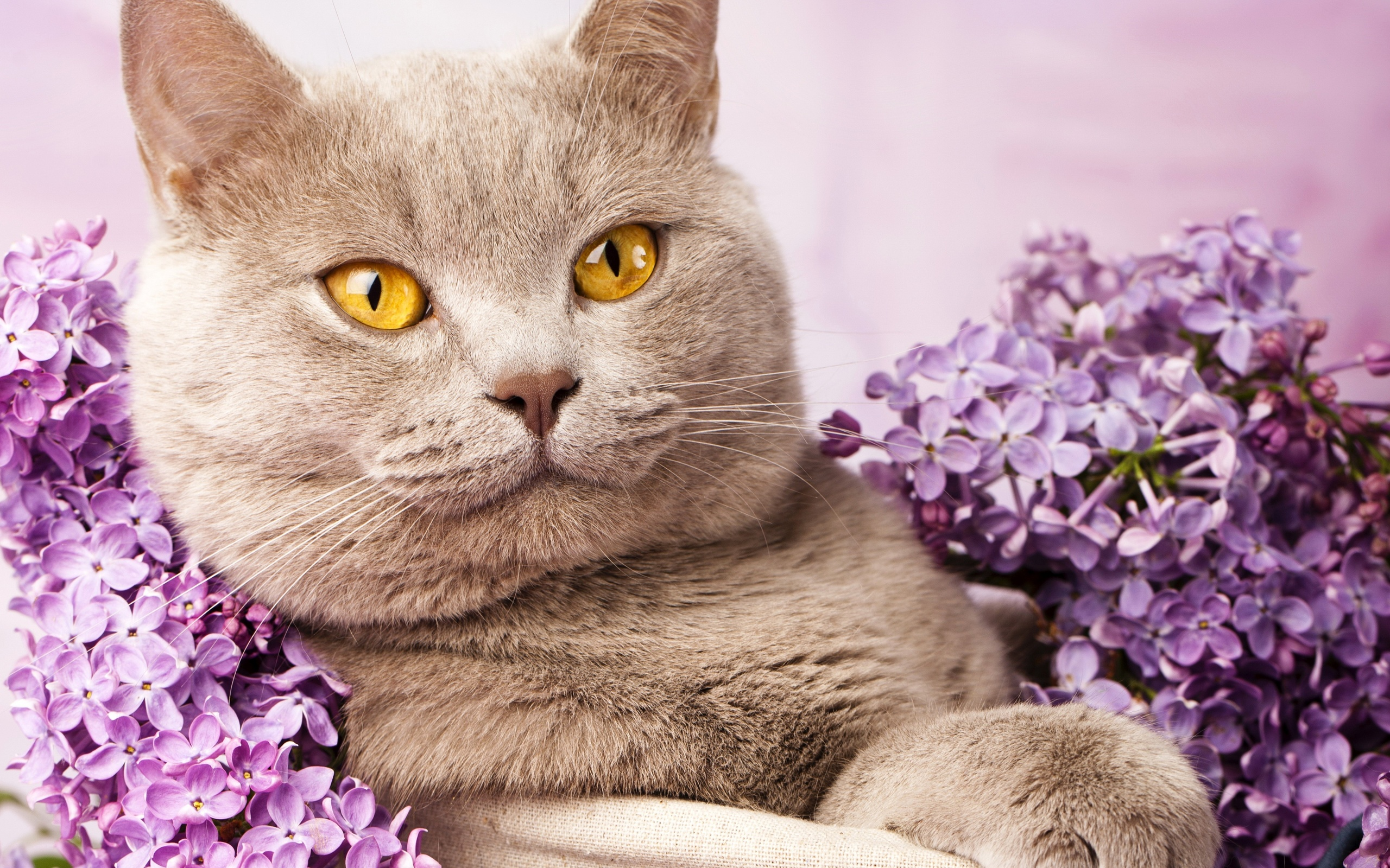Газета, кот в цветах картинки
