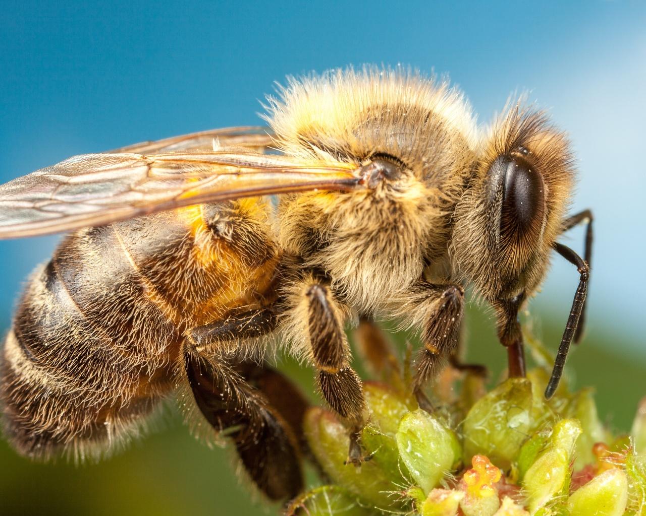 Интересные картинки про пчел информация, некоторых