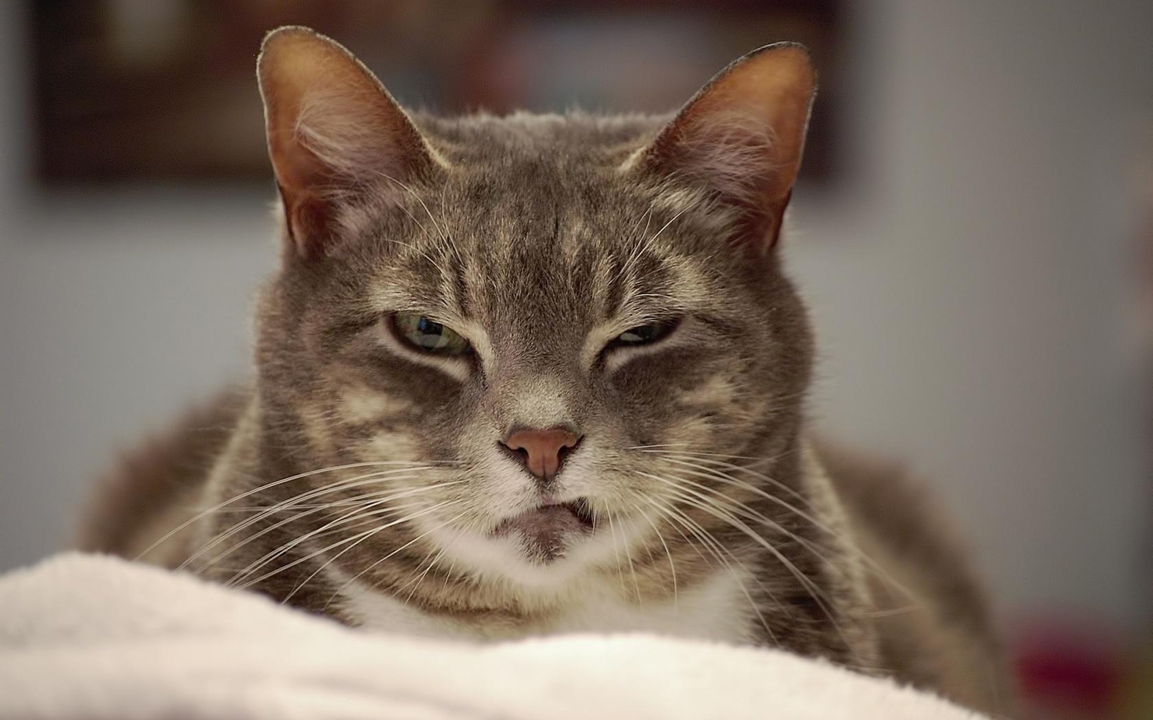 Картинки дерзкий кот