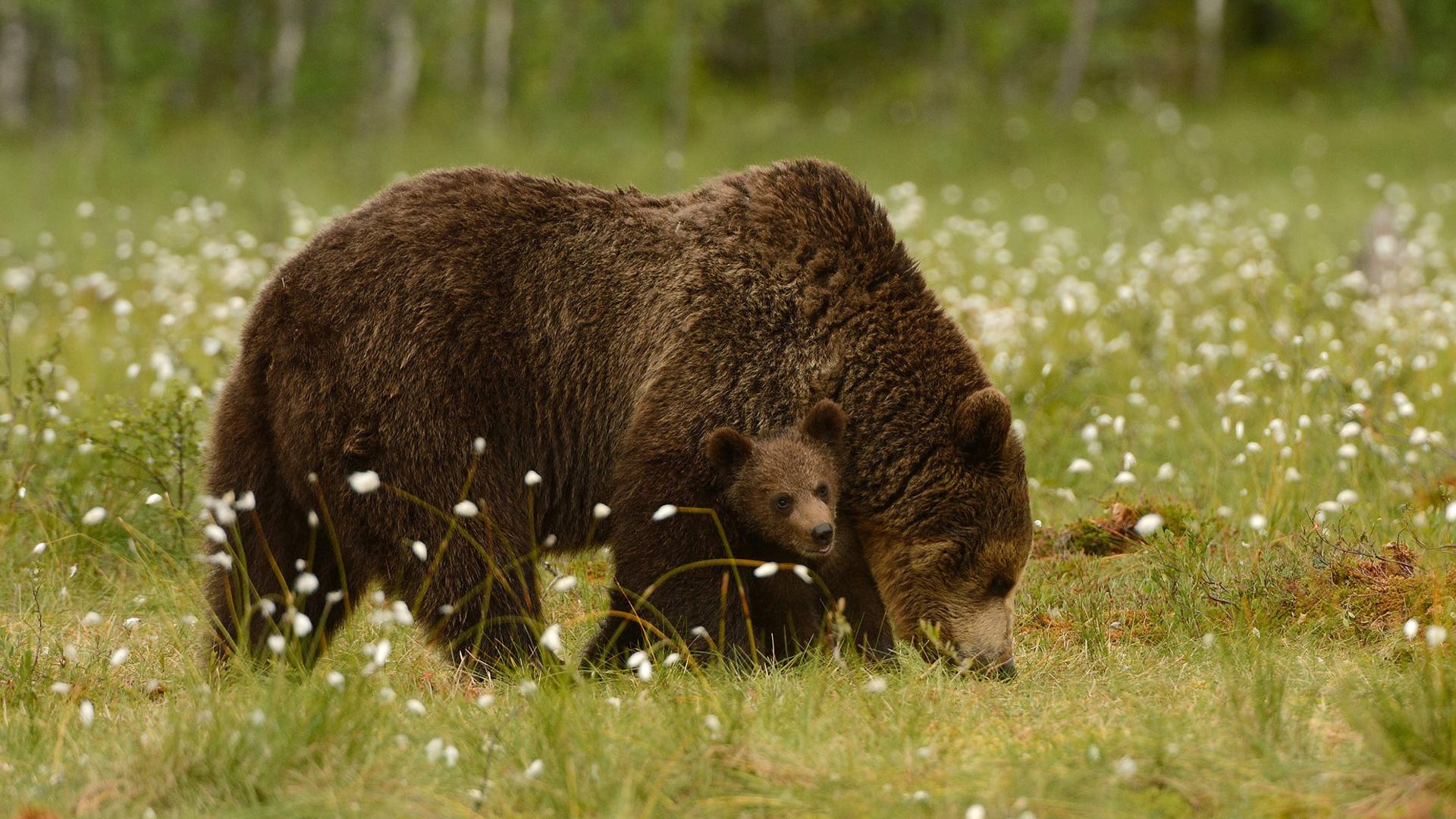 медведь медвежонок сараев фото наличие оригинальная коробка