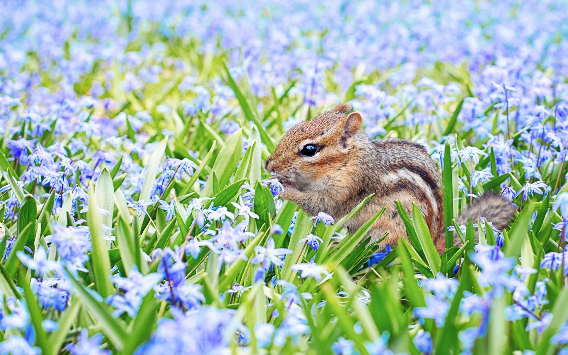 результате картинки весеннее пробуждение животных красиво получаются мягкие
