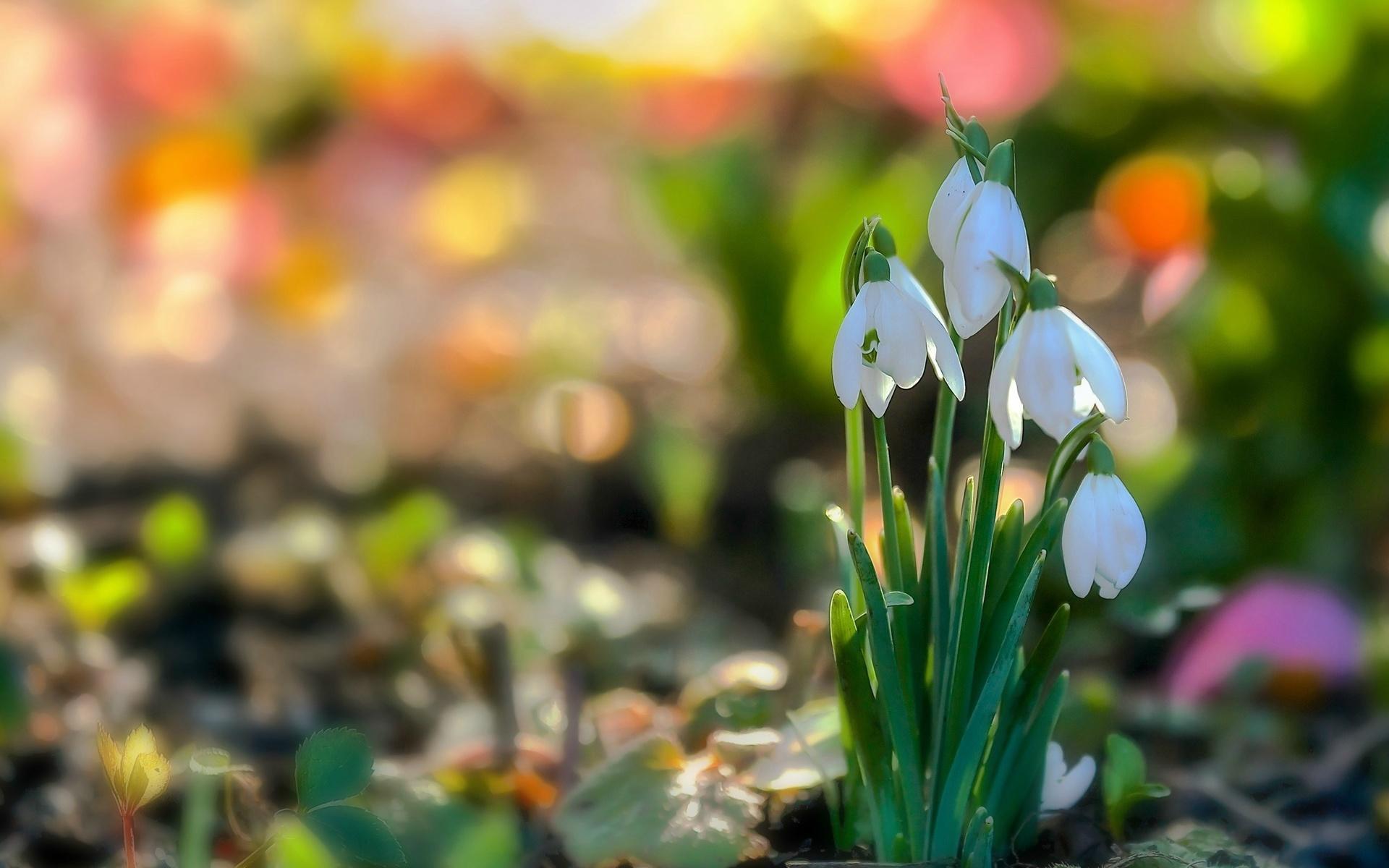 Найти прикольные картинки с праздником весны при этом