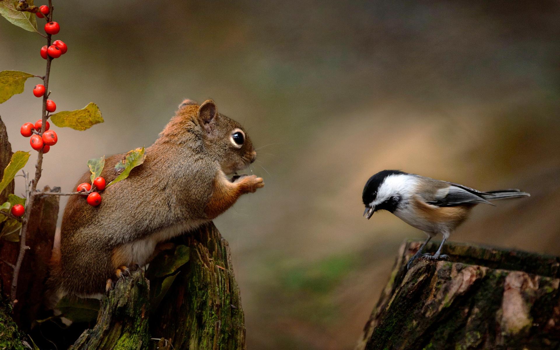 Фото зевающих животных способы
