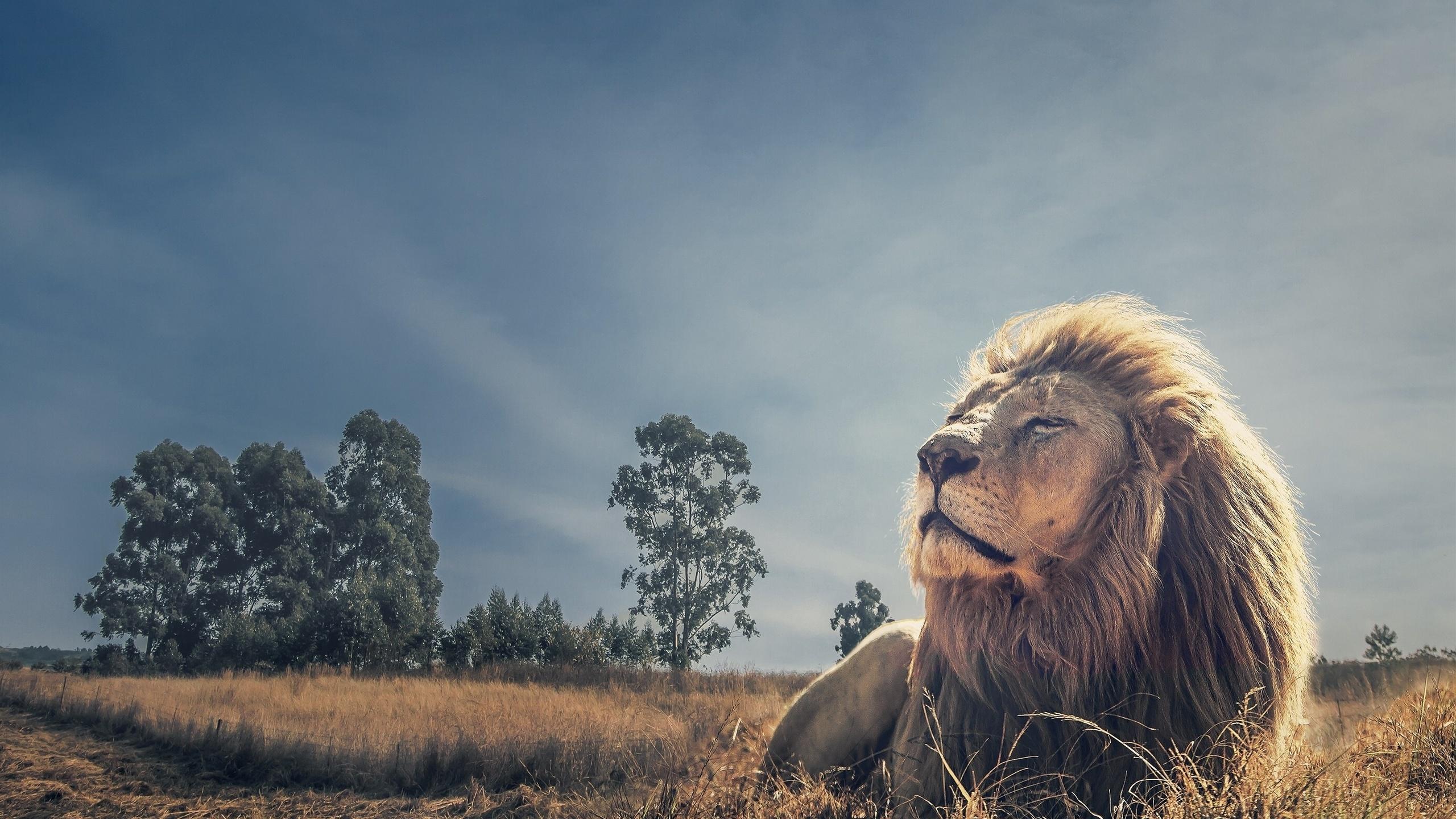 Картинки льва на весь экран